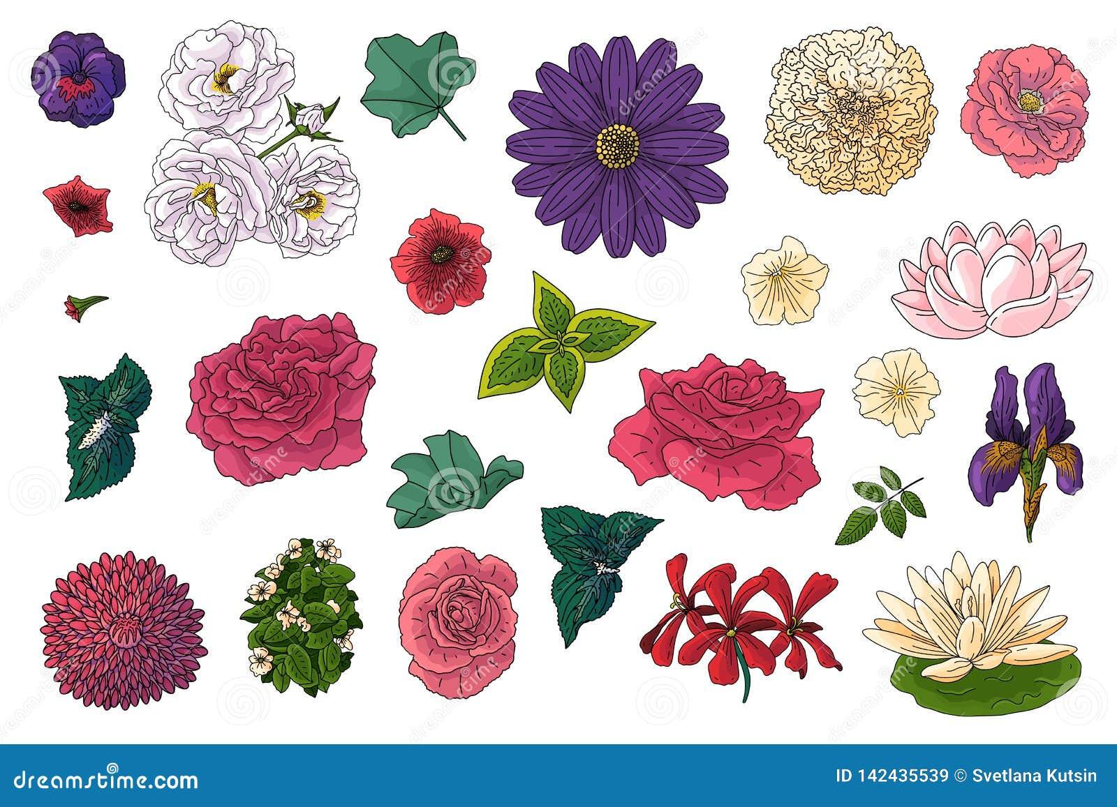 Metta dei fiori differenti nello stile di scarabocchio Elementi disegnati a mano per progettazione floreale di nozze, illustrazio