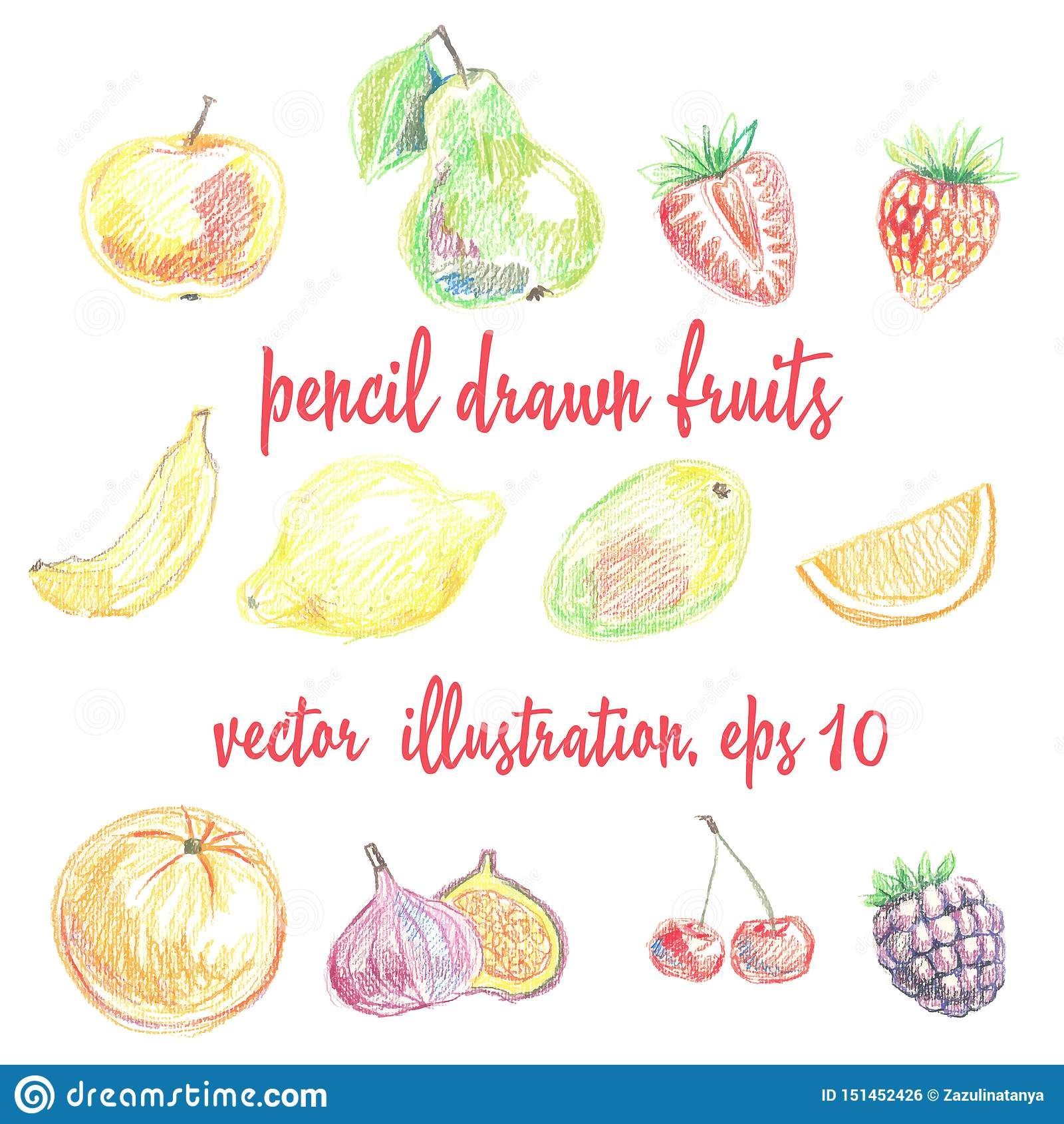 Metta dei frutti e delle bacche matita-disegnati Illustrazione di disegno a mano libera