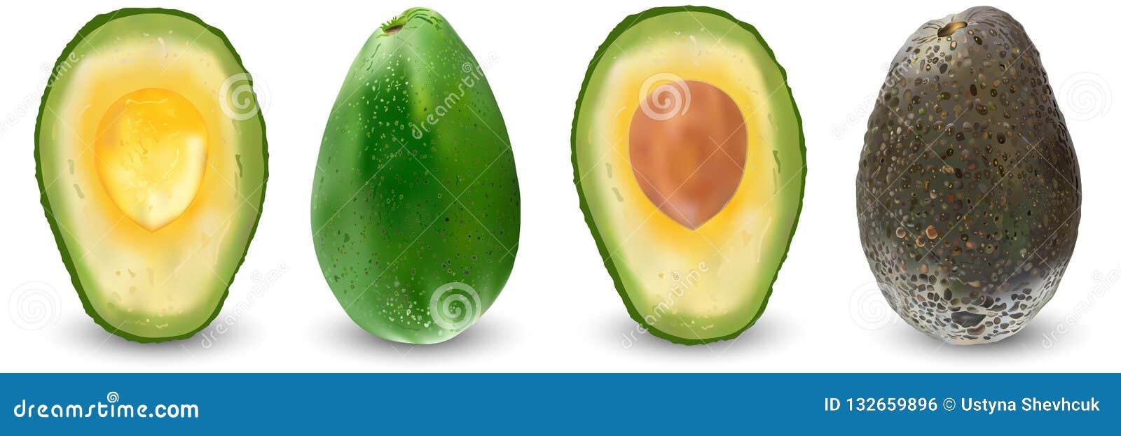 Piante Da Frutto Sempreverdi metta dei frutti realistici maturi dell'avocado
