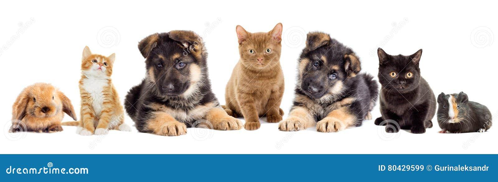Metta gli animali domestici