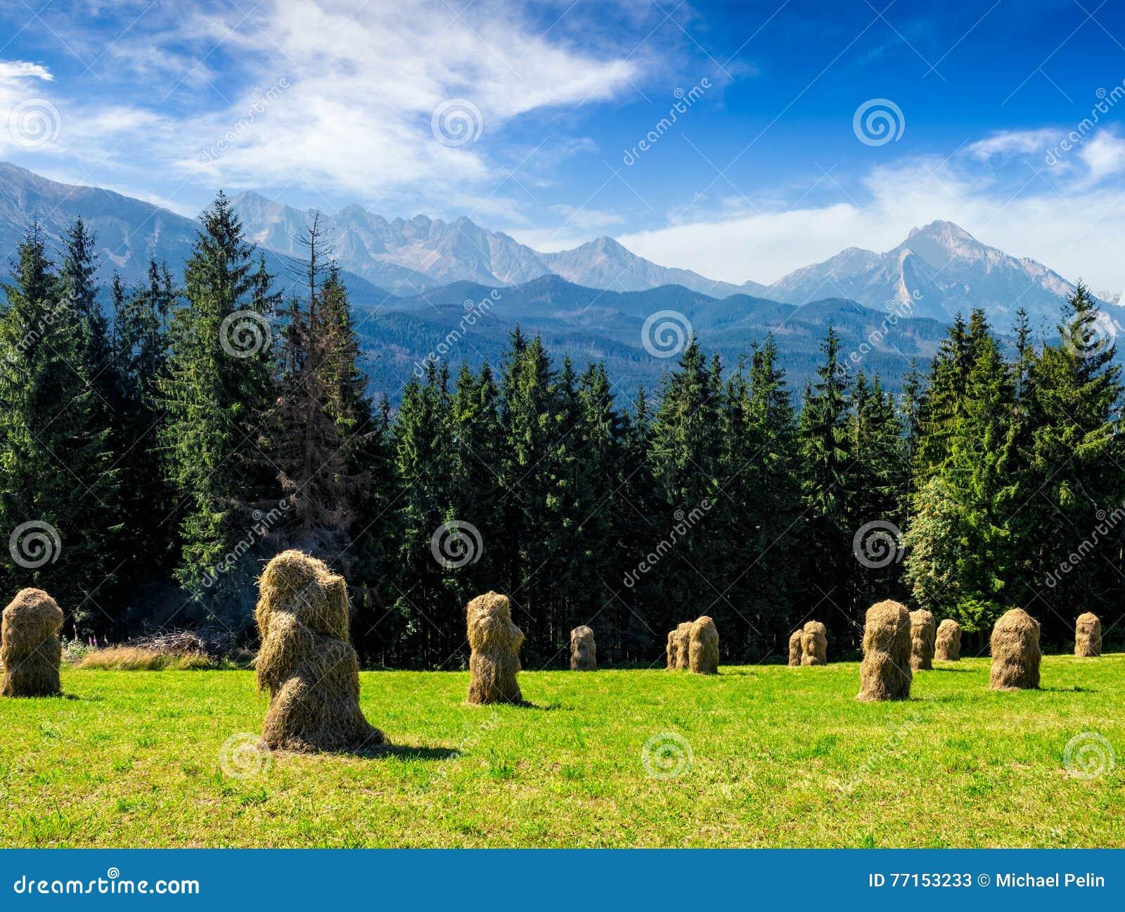 Meule de foin près de forêt sur un pré dans Tatras