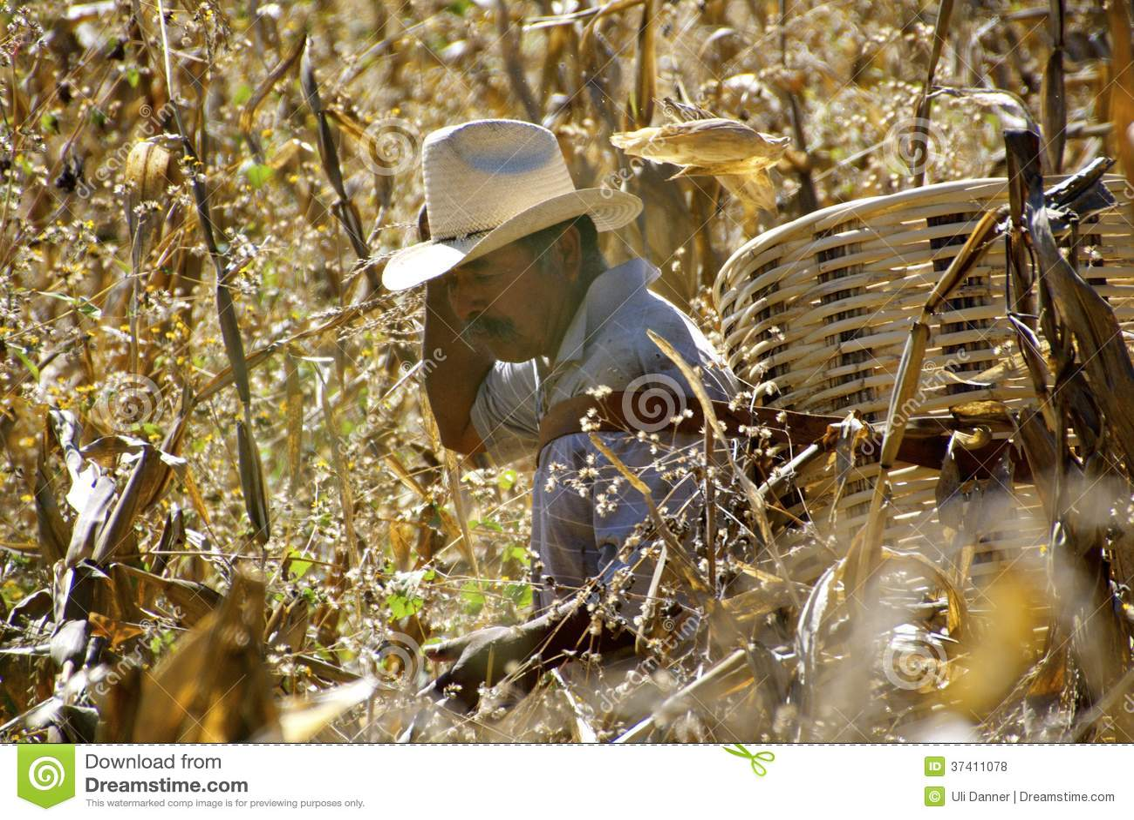 Mexicaanse landbouwer op graangebied