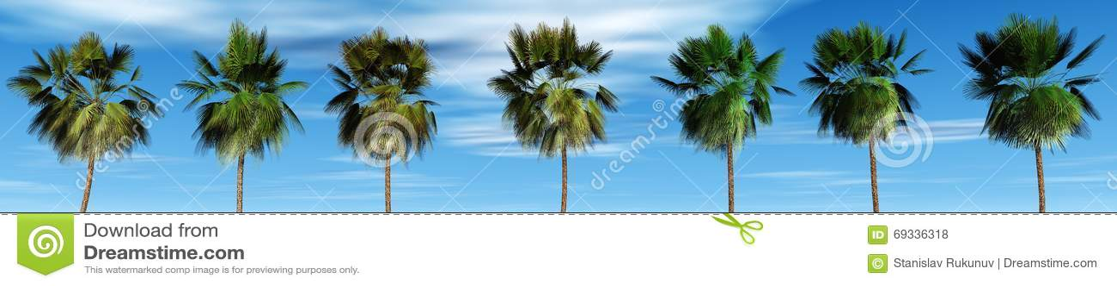 Mexicaanse palmen tegen de hemel, tropisch panorama