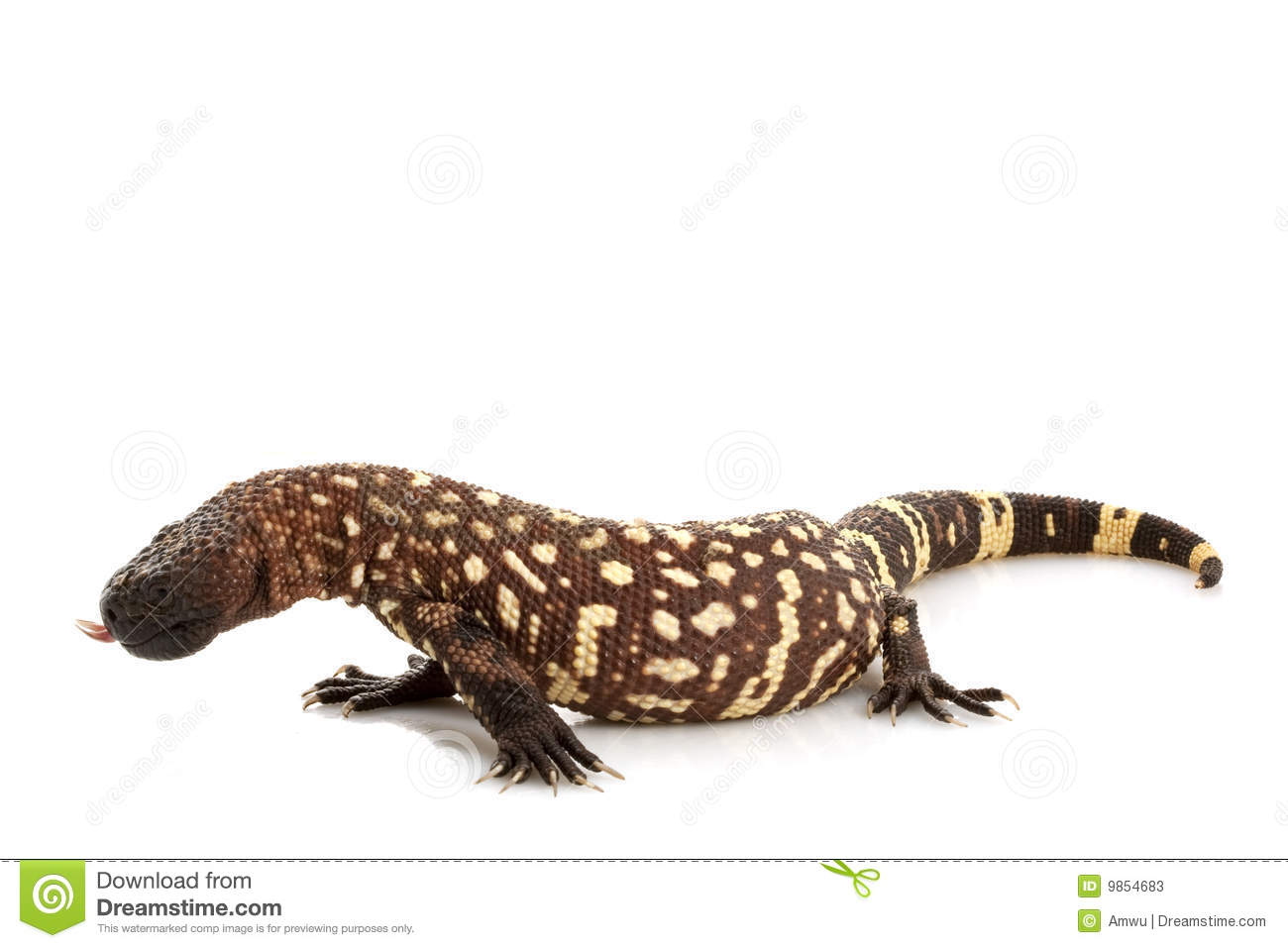 Mexican Beaded Lizard 3 Stock Image Image 18413961