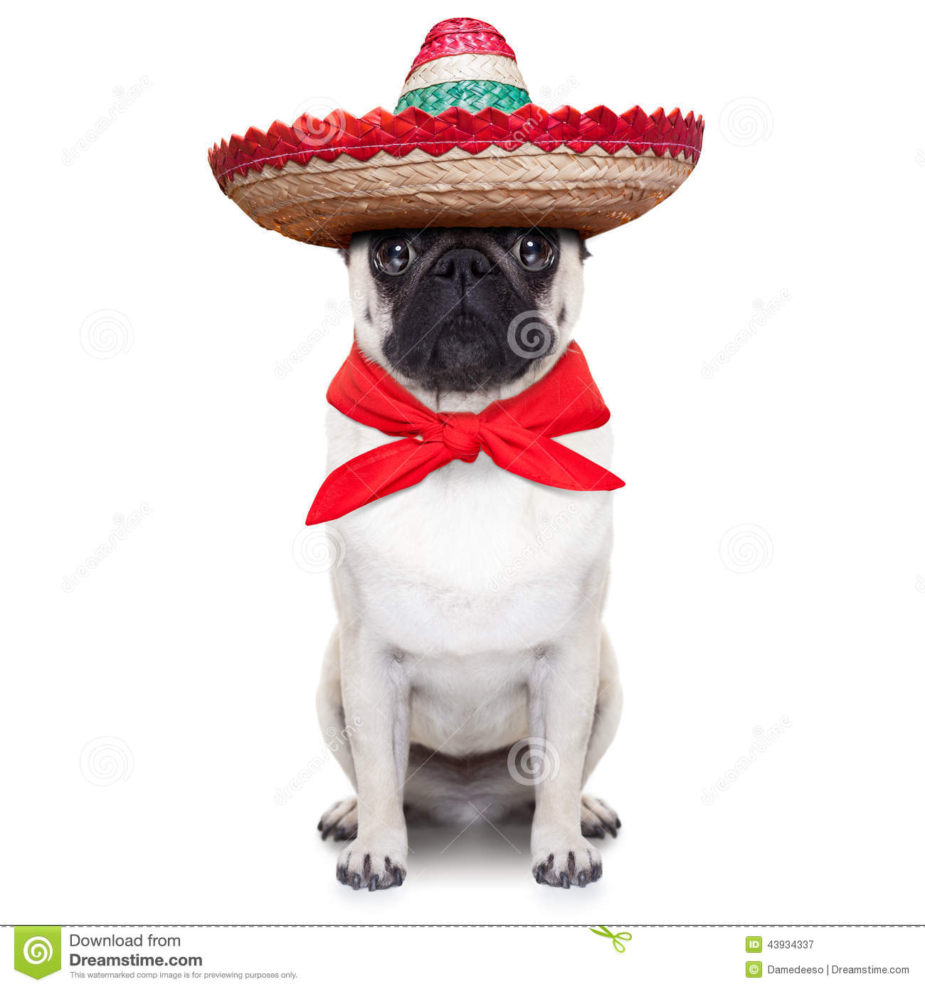 Mexican dog with big sombrero hat and red tie.