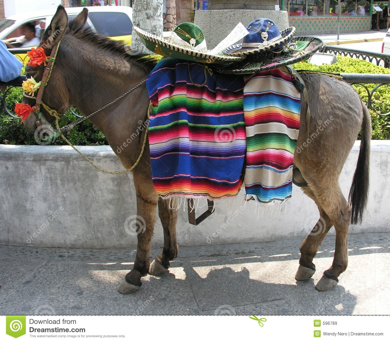 Mexican Donkey Royalty Free Stock Images - Image: 596789
