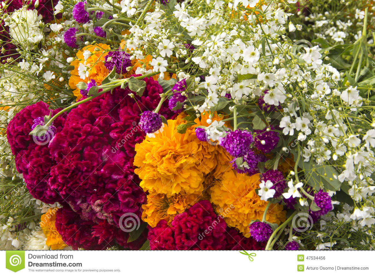 Mexican Flowers Stock Image