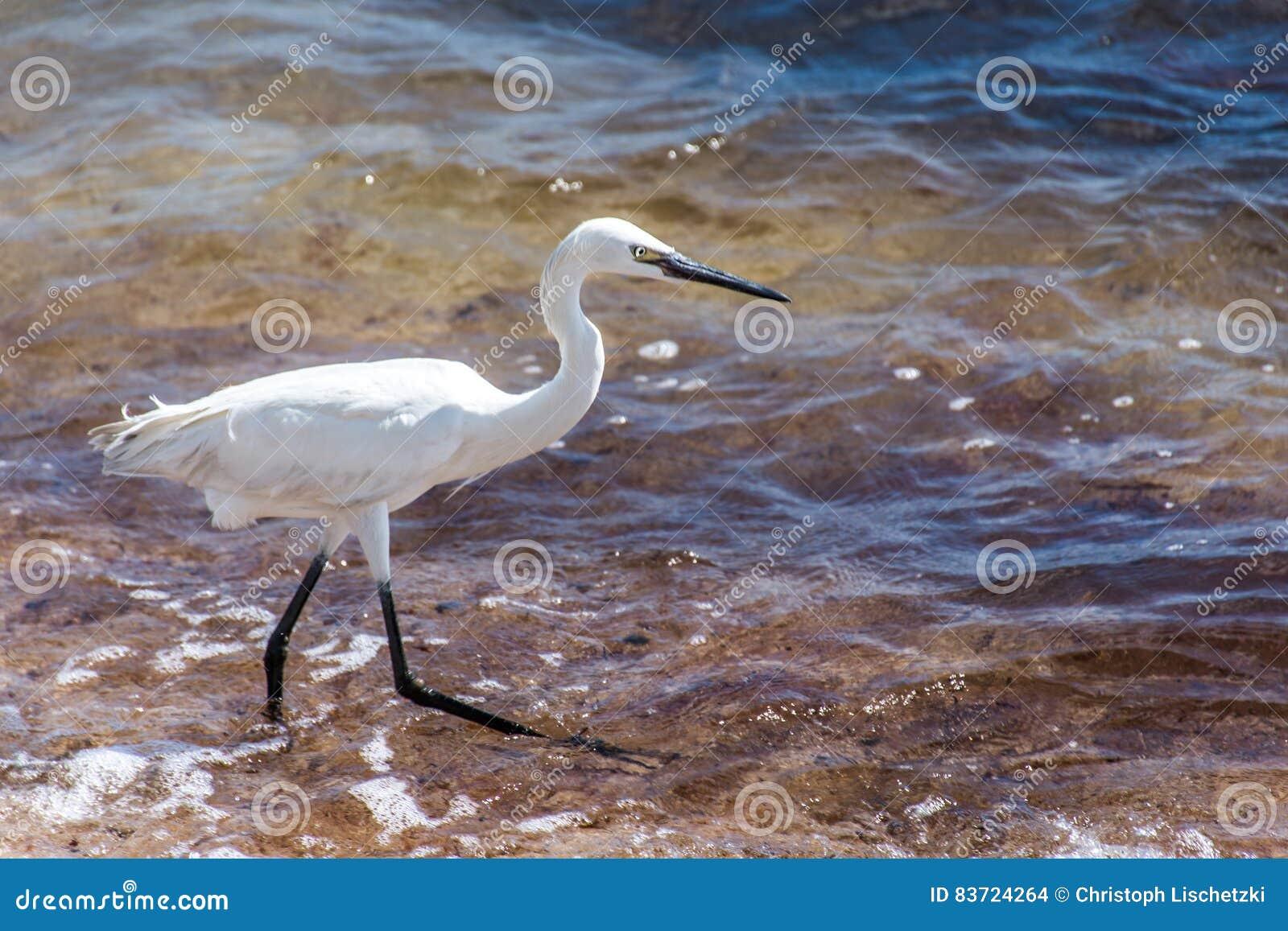 Mexican Heron Bird Beach Del Carmen Yucatan Stock Photo