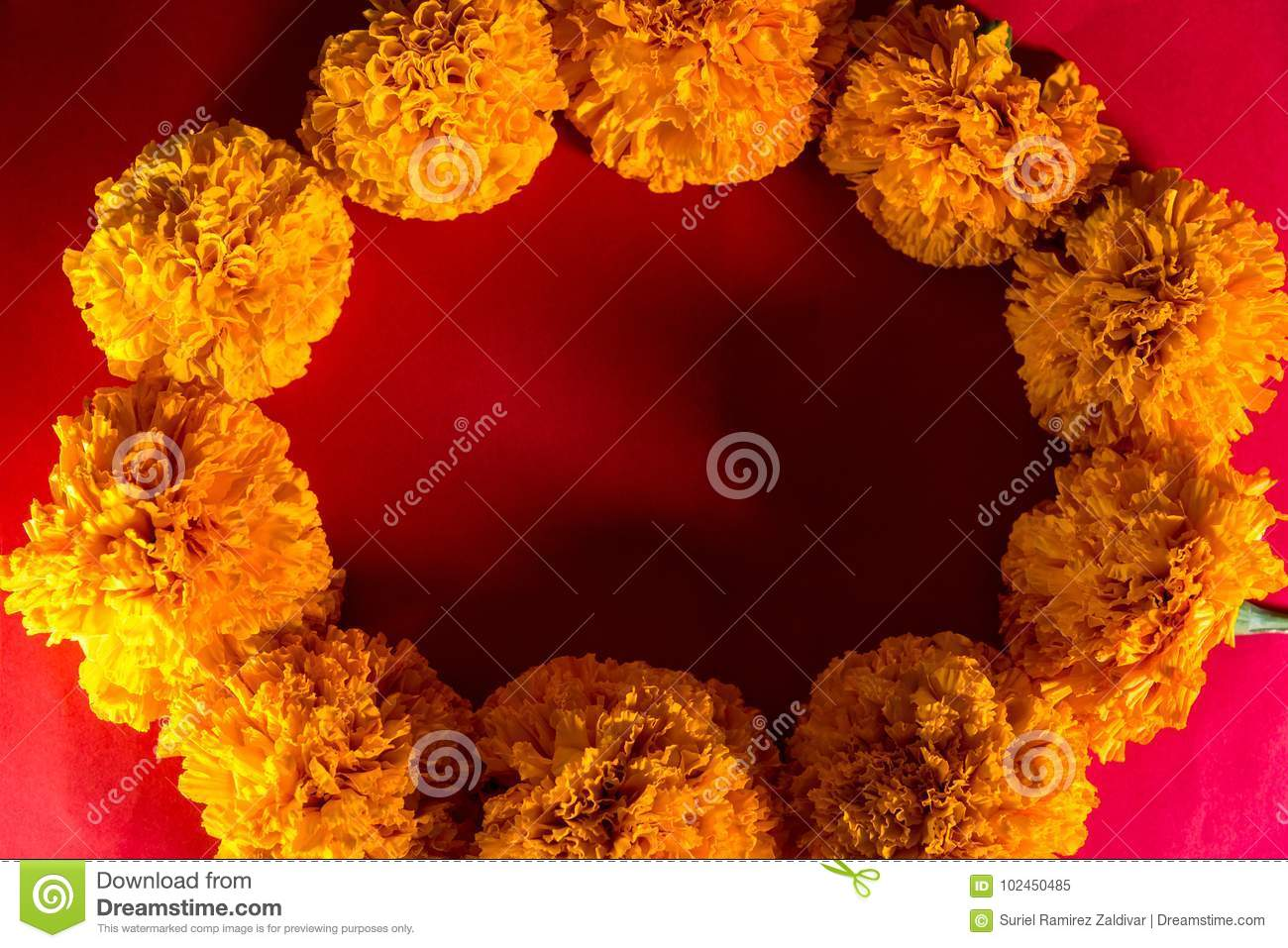 Mexican Marigold Cempasuchil Flower Day Of The Dead Celebration