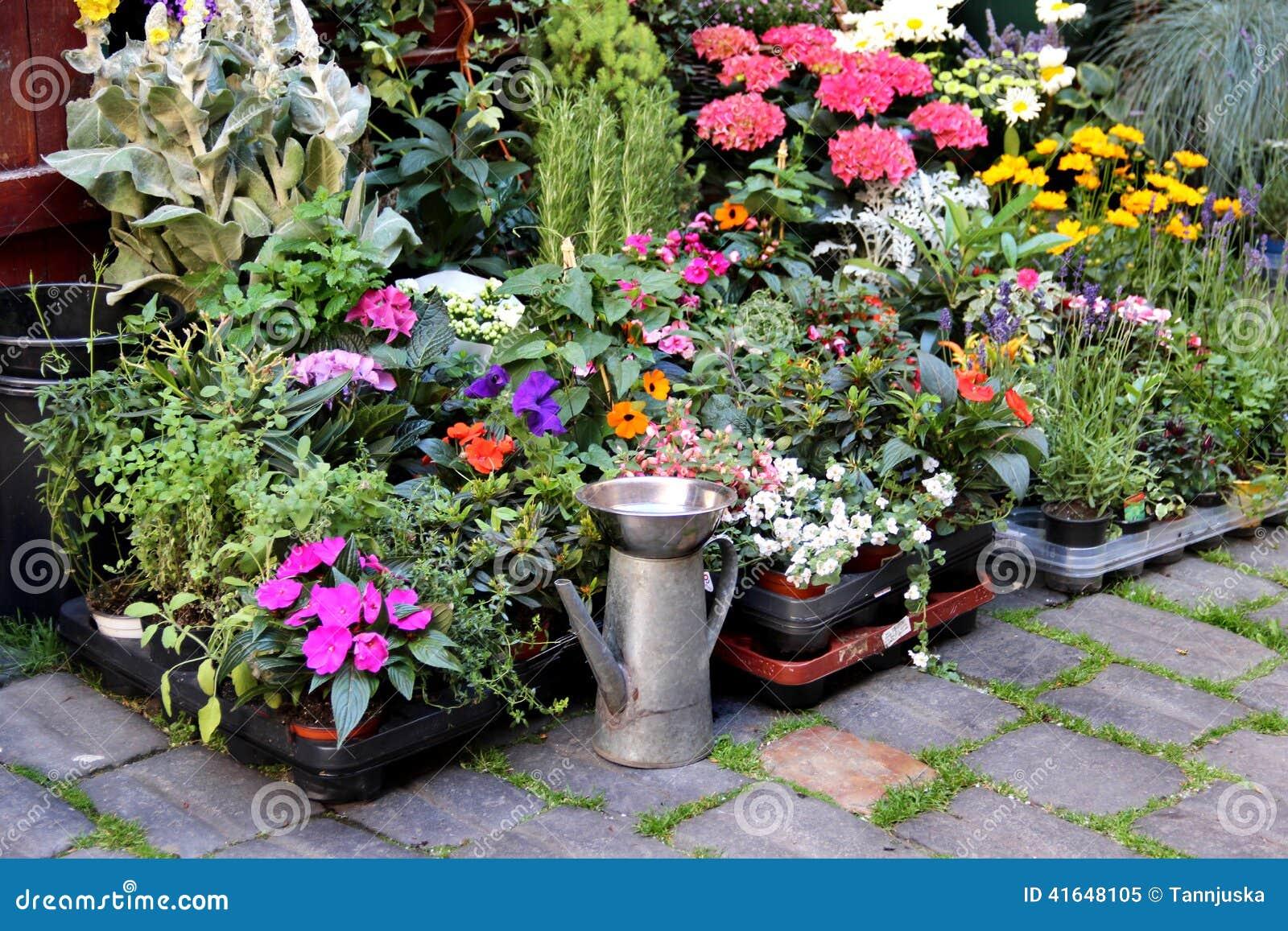 Mezcla De Flores Vivas Hermosas De La Terraza Imagen De