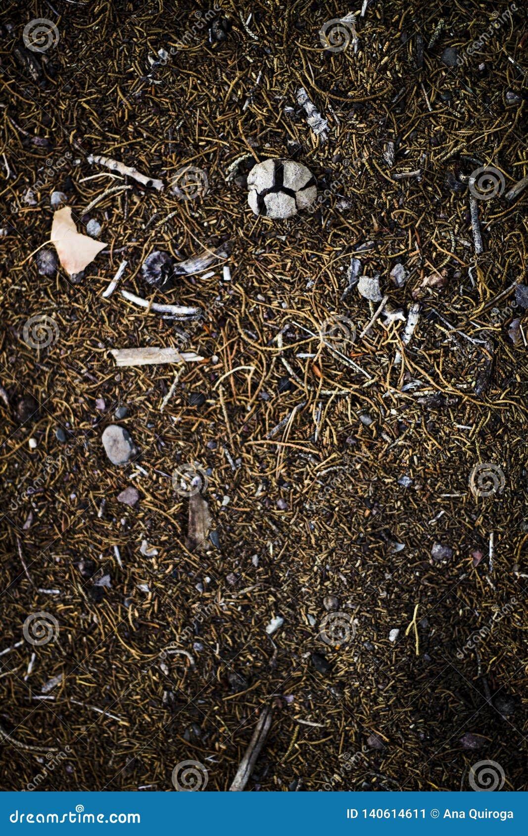 Mezcla de objetos del campo, de piedras, de tierra oscura, de palillos y de ramas de árbol