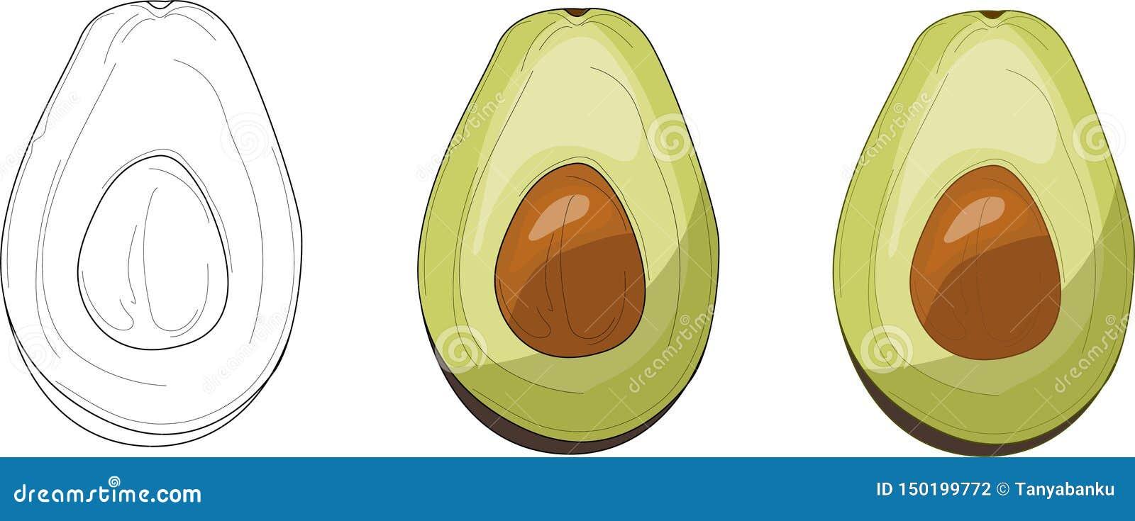 Mezzo insieme dell avocado Illustrazione di vettore Carta di coloritura, pagina, libro