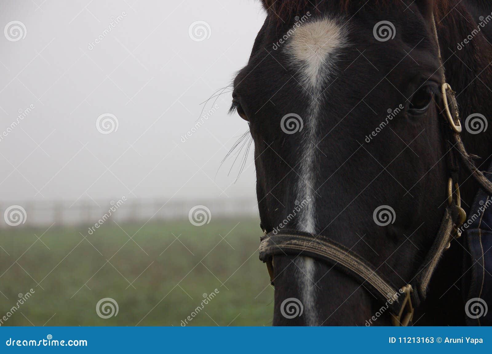Mgła czarny koń