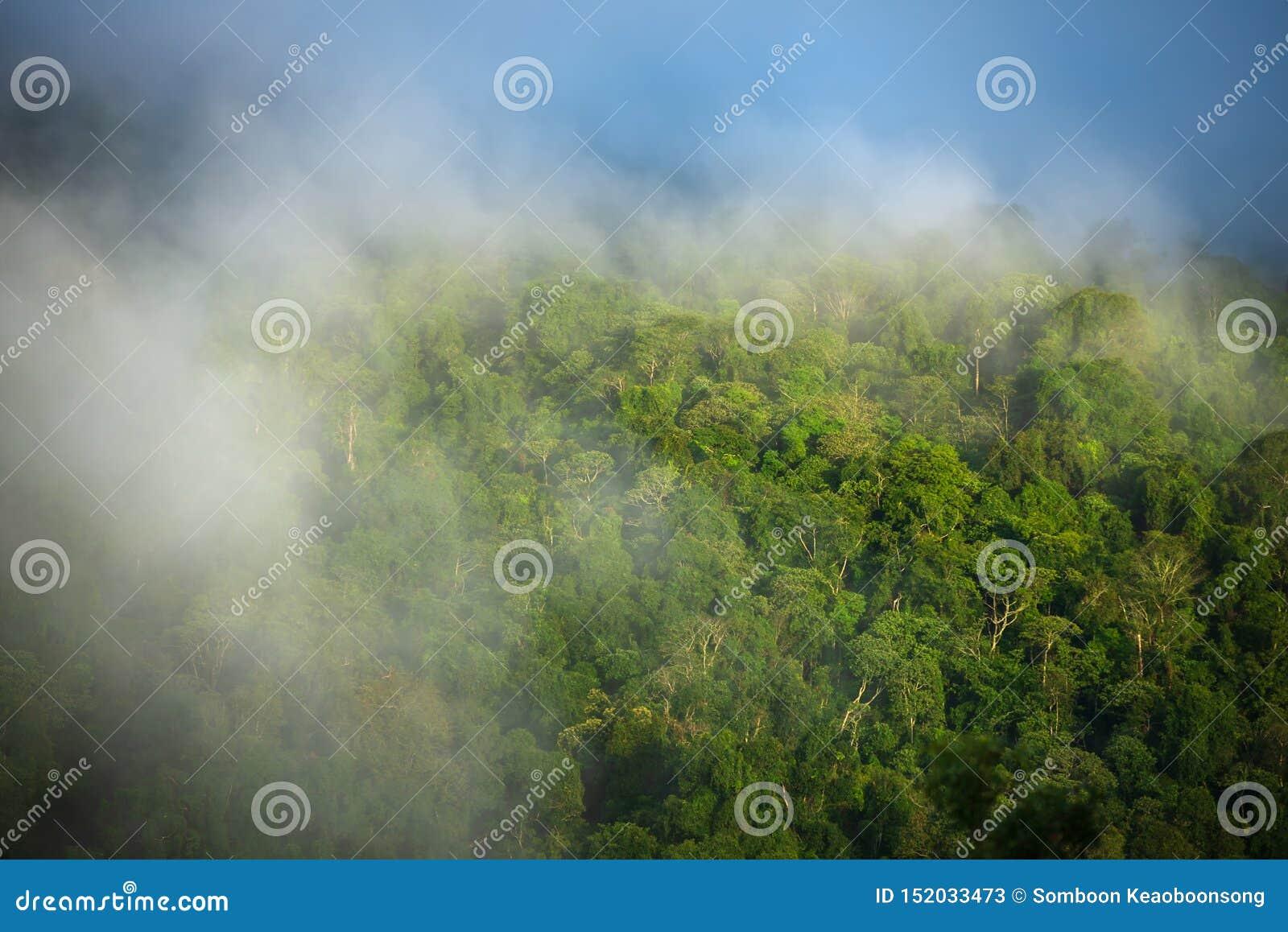Mgła na górach i lesie