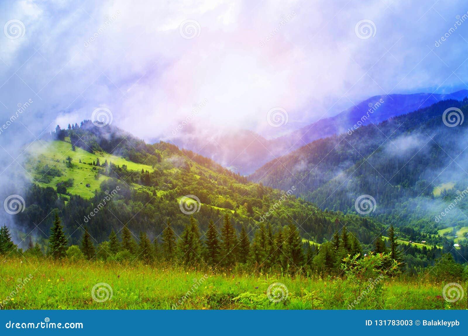 Mgła na lesie sosny i łąki w górach