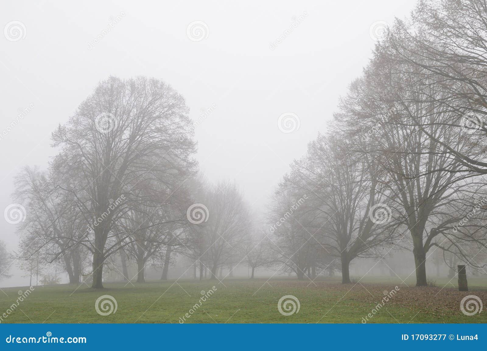 Mgła ranek