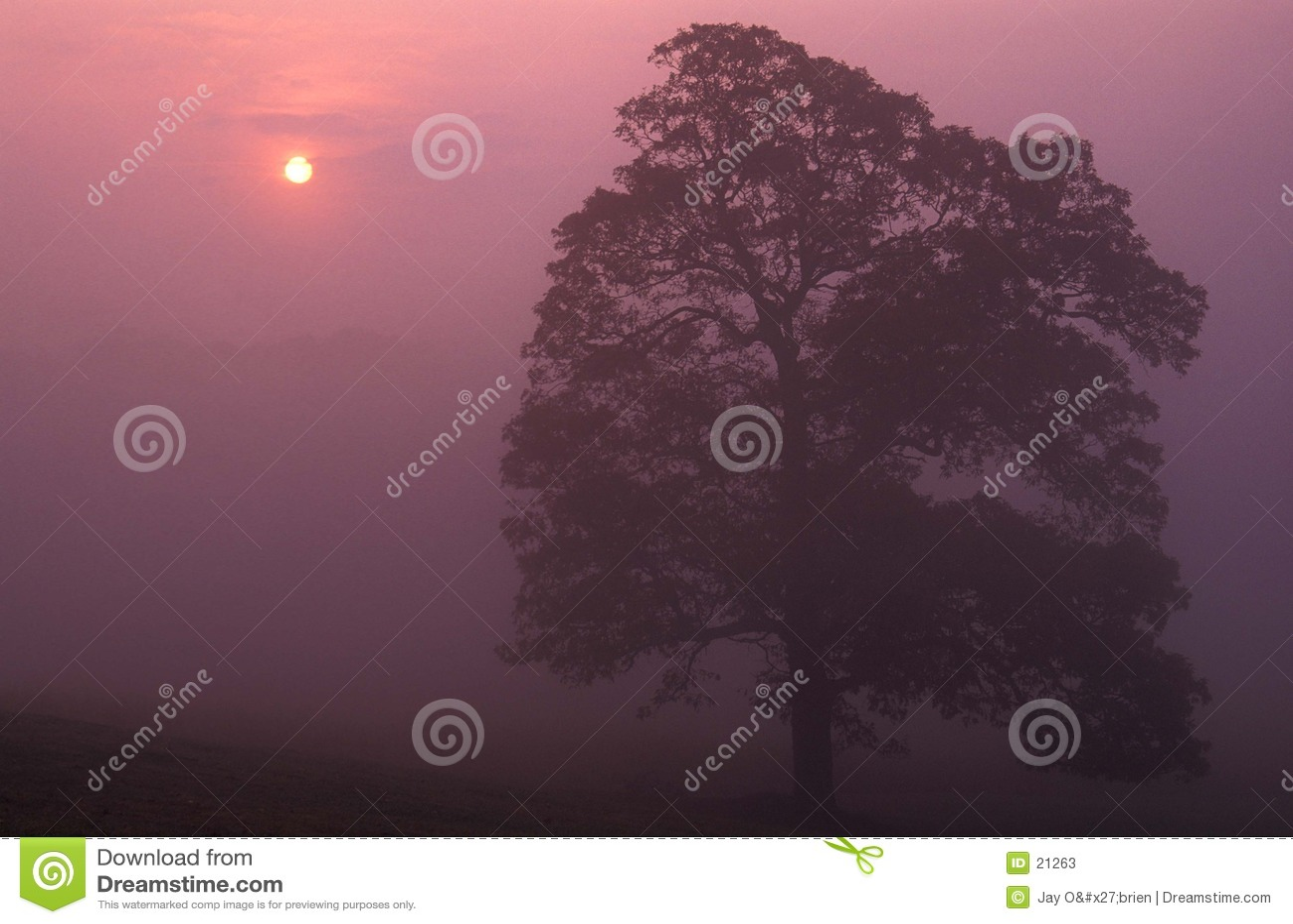 Mgła wschód słońca