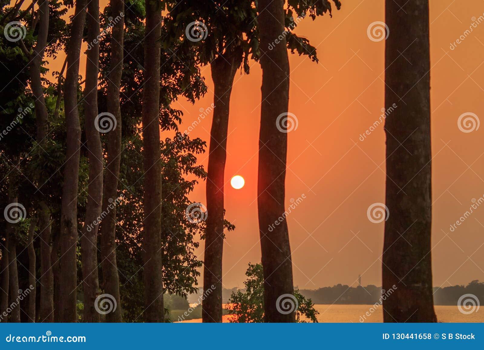 Mgławy zmierzch przez treeline Słońca oświetlenie w wieczór Złoty godzina widok wiejski indu miasto