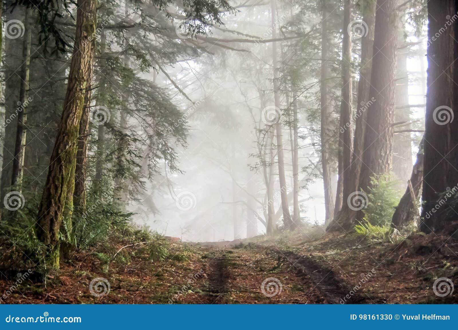 Mgłowy las Bolinas grań