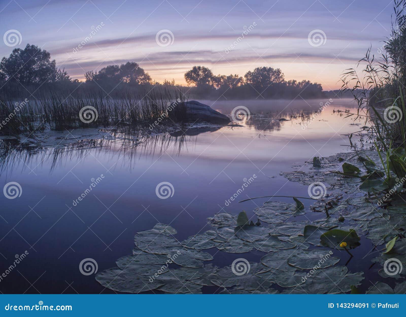 Mgłowy lato krajobraz z małą lasową rzeką