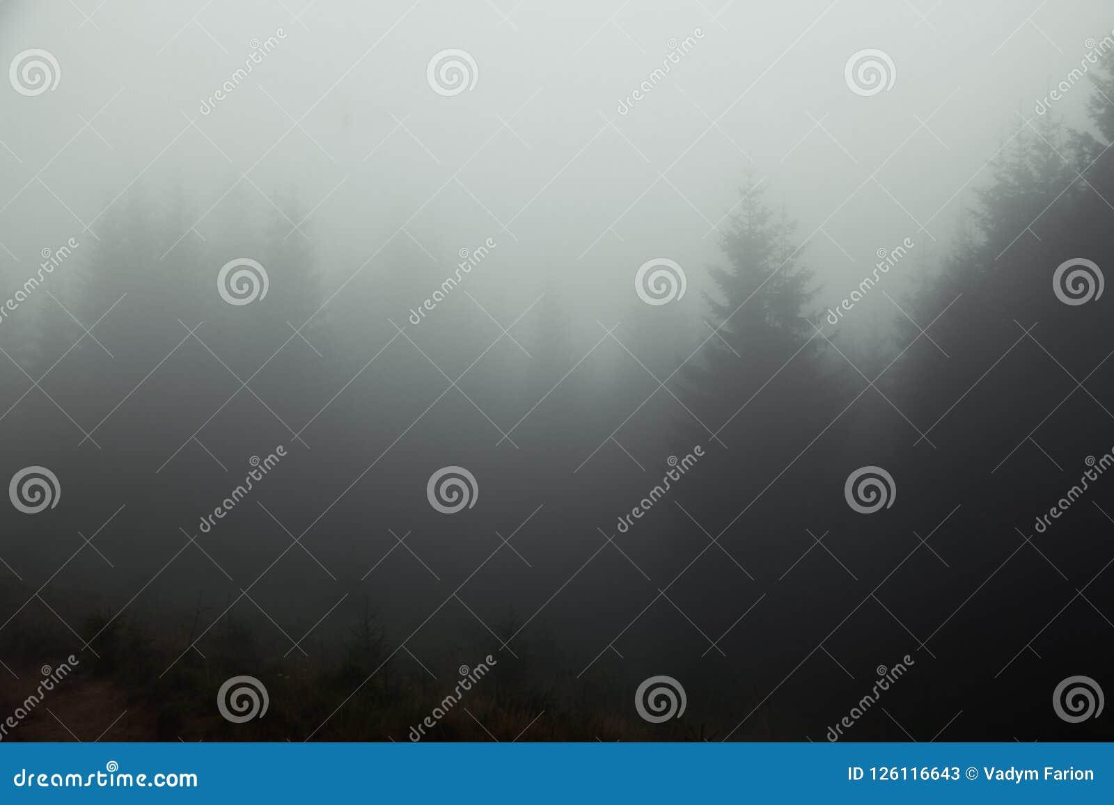 Mgłowy lato ranek