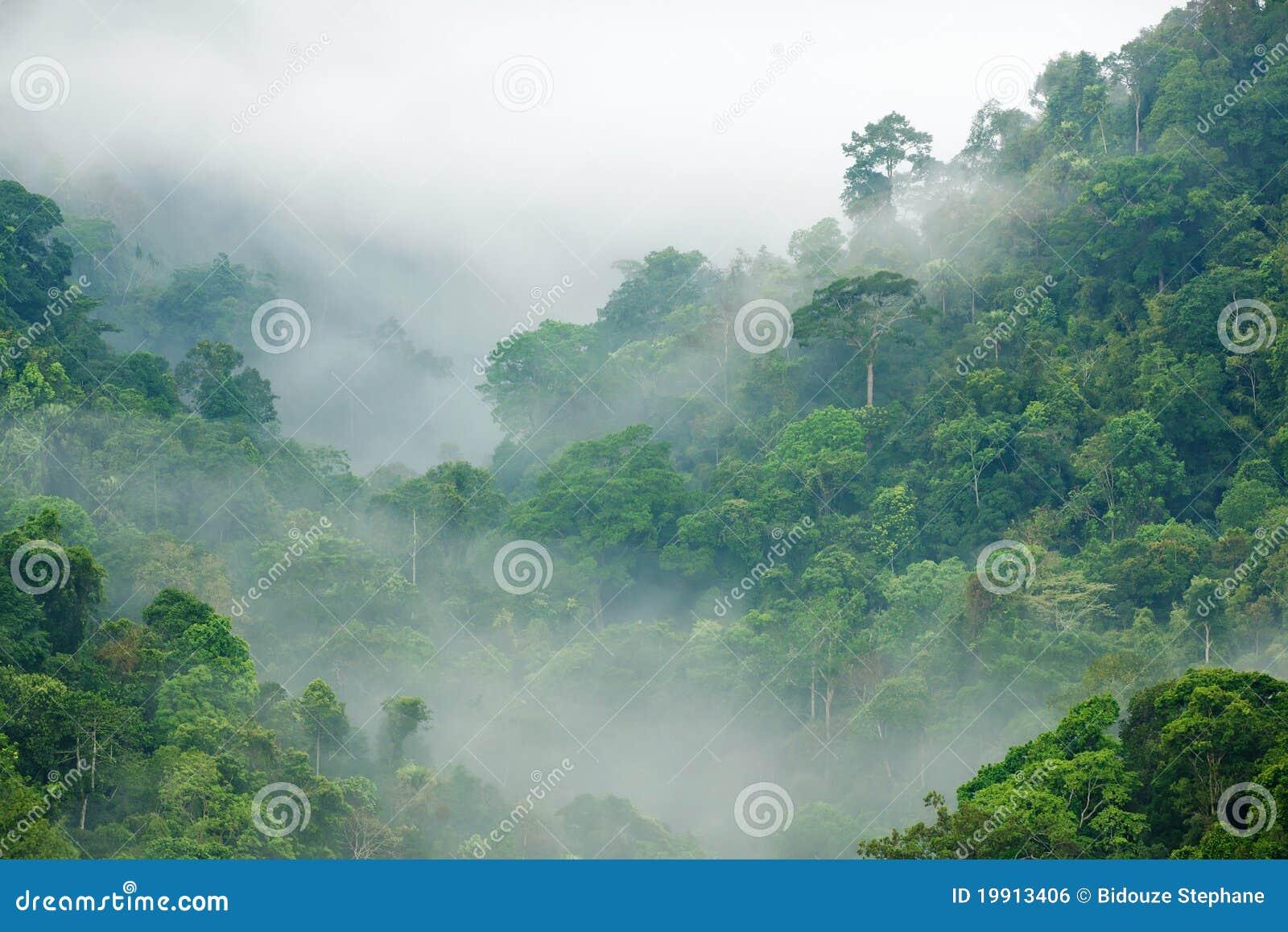Mgły ranek tropikalny las deszczowy
