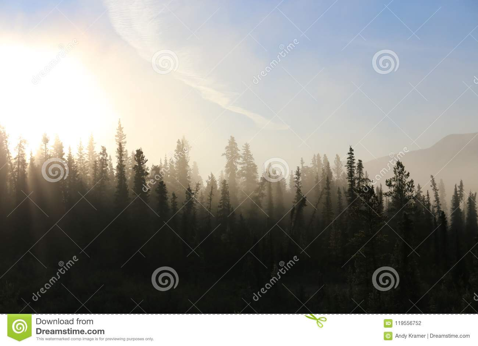 Mglisty tundrowy las