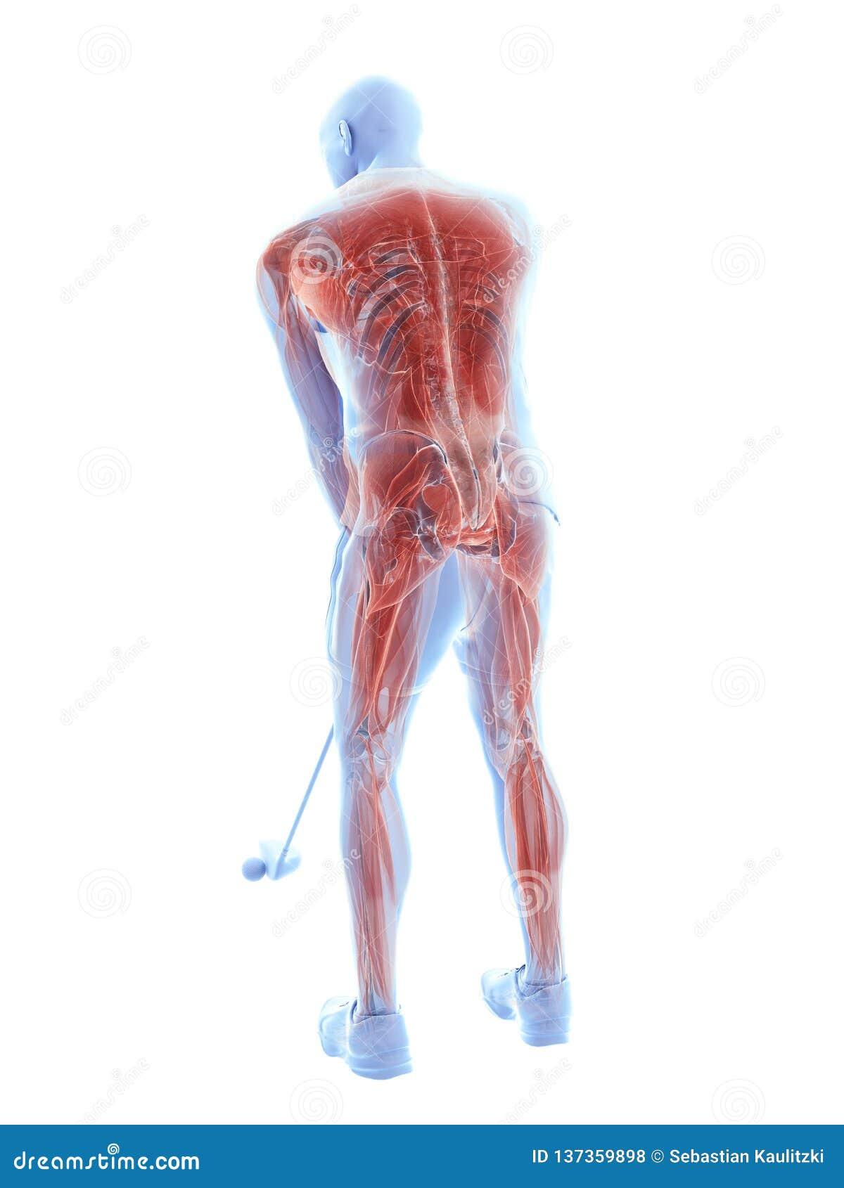 Mięśnie golfowy gracz