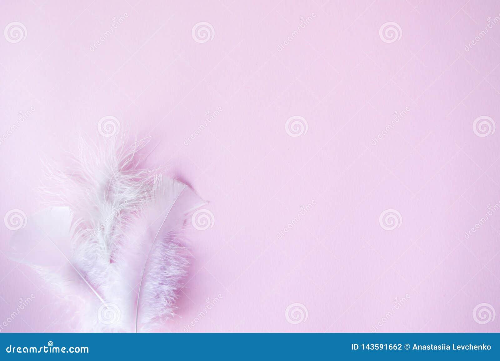 Miękka część pasteli/lów różowy tło, ślub, valentines temat z białymi piórkami dla kopii przestrzeni minimalny poj?cie pomys?