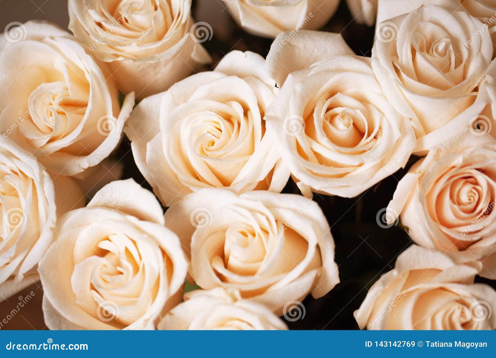 Miękkich części różowe beżowe róże z rosa kroplami Selekcyjna ostrość Zakończenie horyzontalny Mockup dla kartki z pozdrowieniami