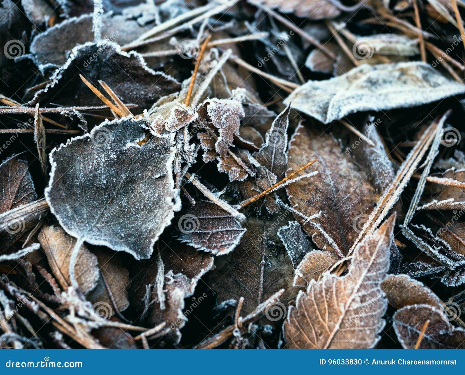 Miękkiej ostrości suchy liść spadać z lodowym kryształem na podłoga od jesieni