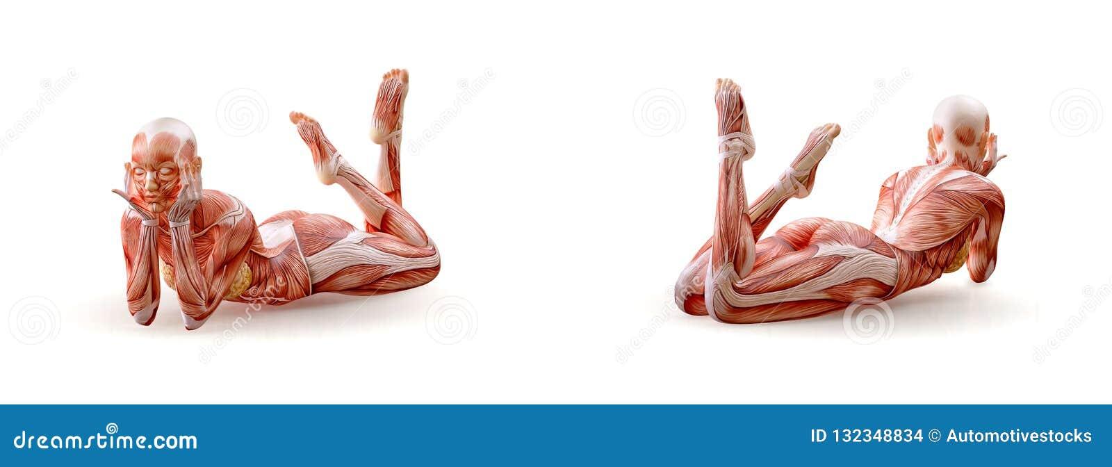 Mięsień anatomii żeńskiej postaci trening, odizolowywający Opieki zdrowotnej, sprawności fizycznej, tana, diety i sporta pojęcie,