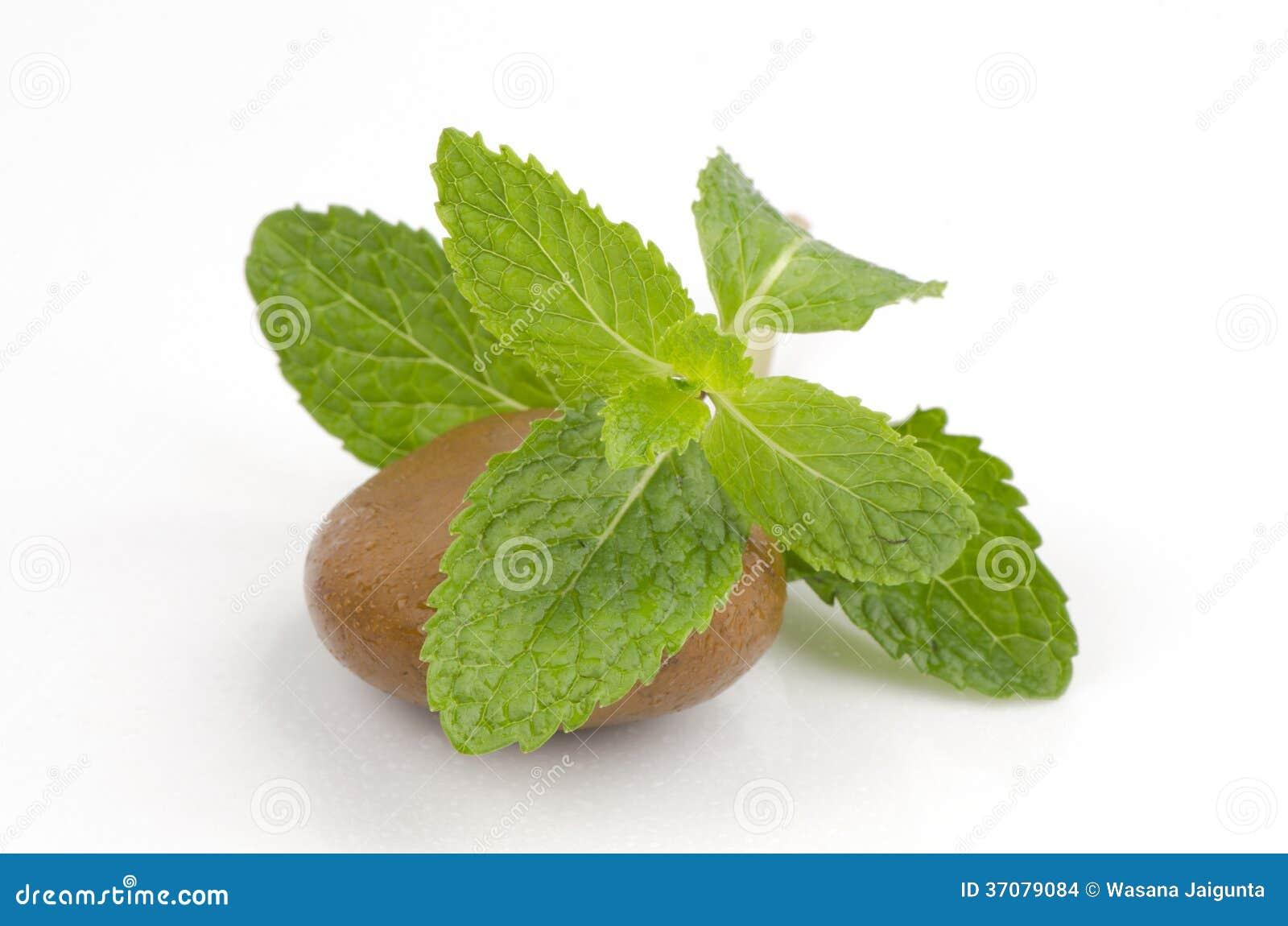 Download Miętówka, Mędrzec, Kuchni Mennica, Bagno Mennica (Mentha Cordifolia Opiz.) Zdjęcie Stock - Obraz złożonej z zdrowy, ziele: 37079084