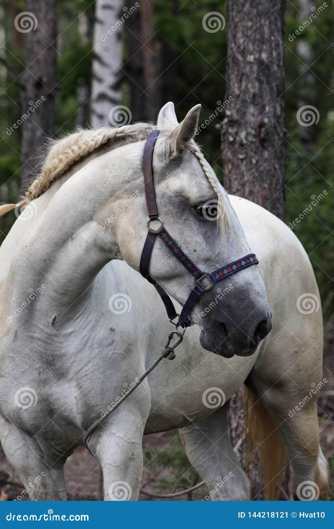 Miło dekorujący koń przy lokalny fiesta, Andalucia