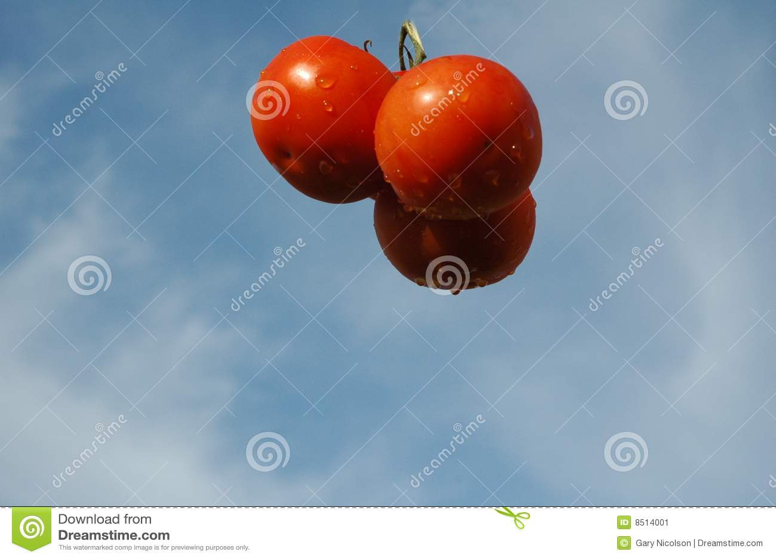 Mi d air suspendu trois tomates