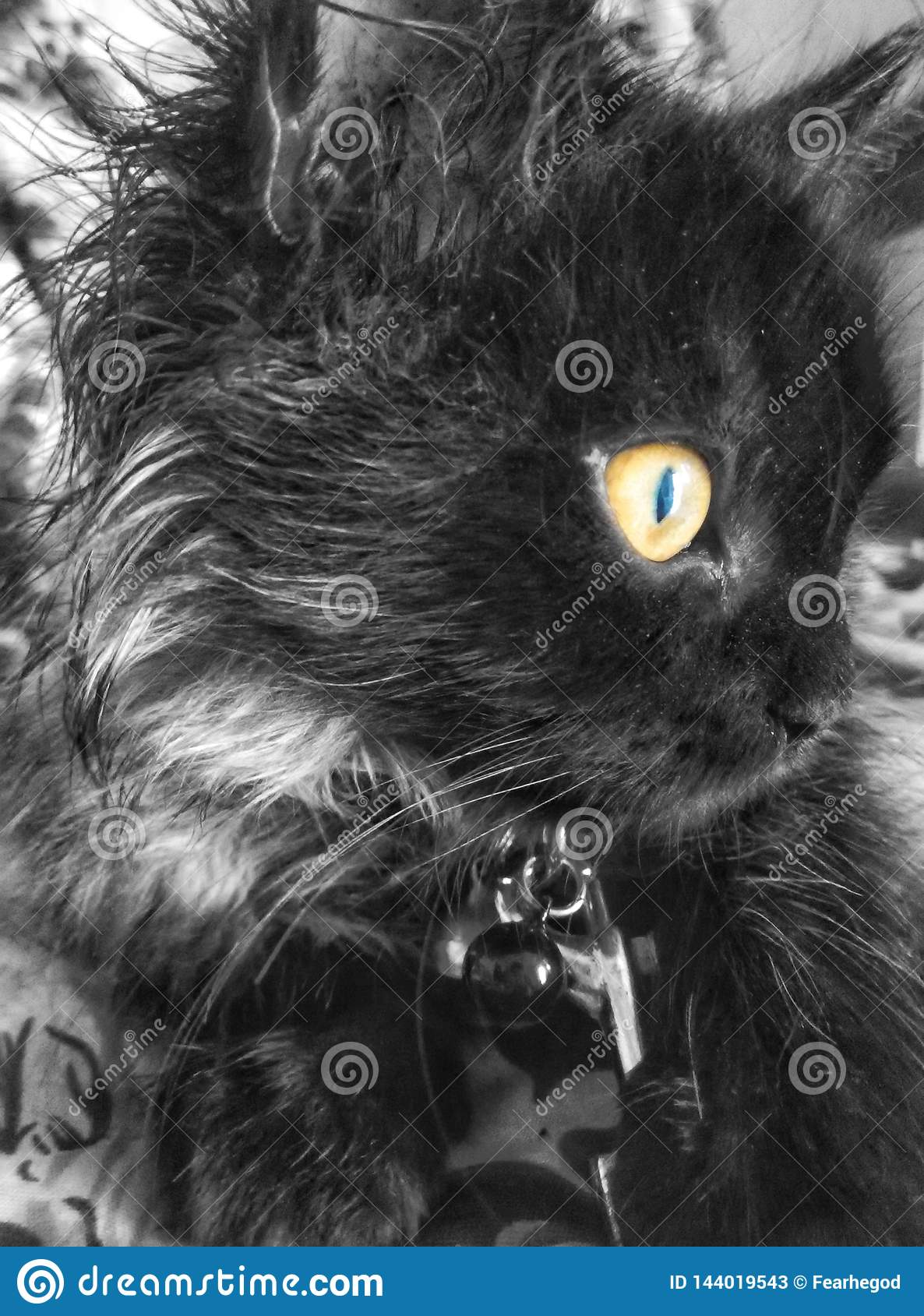 Mi gato negro persa no es bueno para presentar a la cámara Pero hago clic algunas imágenes al azar, ésta soy apenas el uno que mi