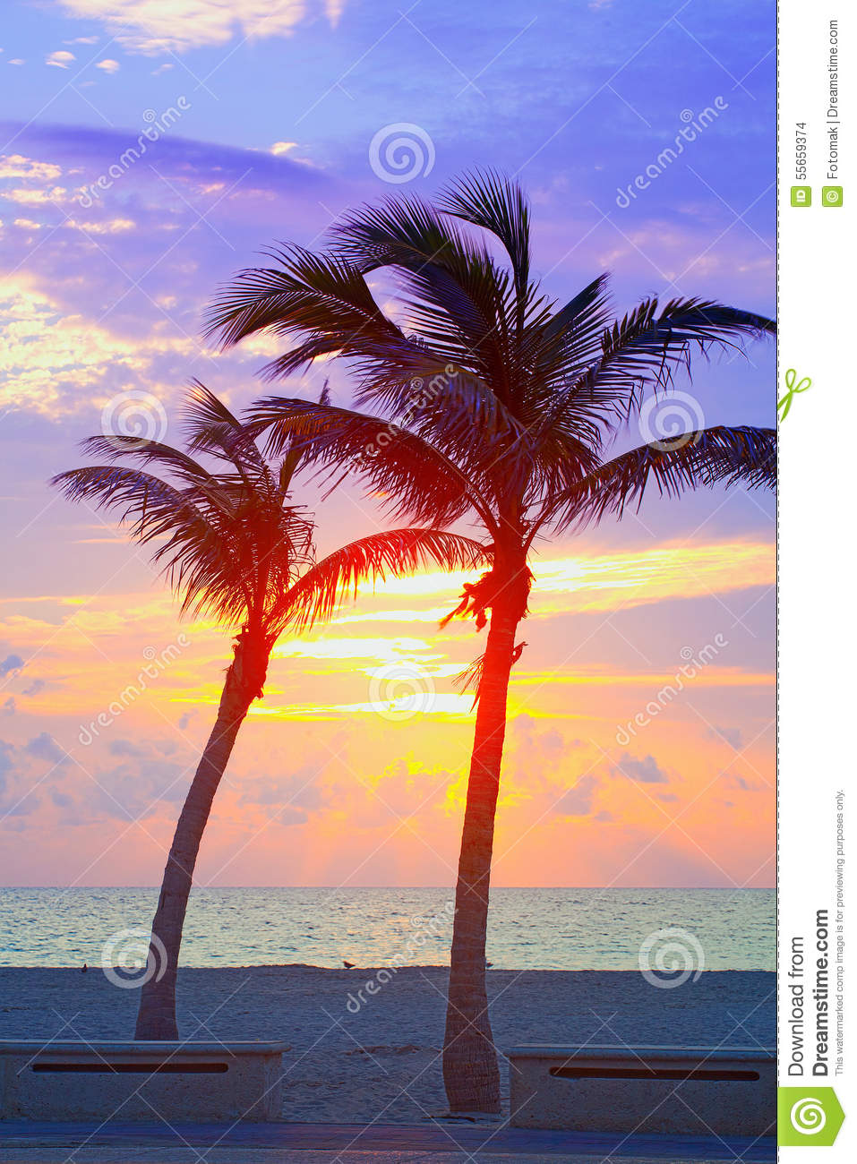 Miami Beach Florida Colorful Summer Sunrise Or Sunset With Palm Trees