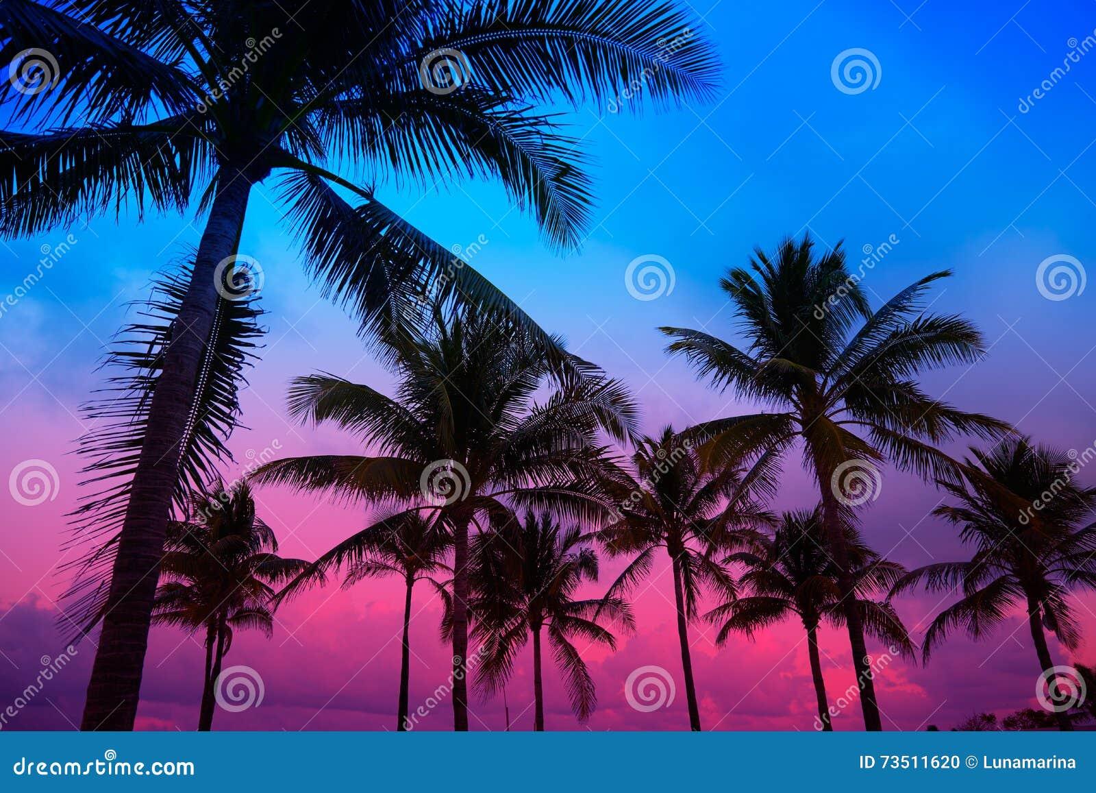 Miami Beach South Sunset Palm Trees Florida