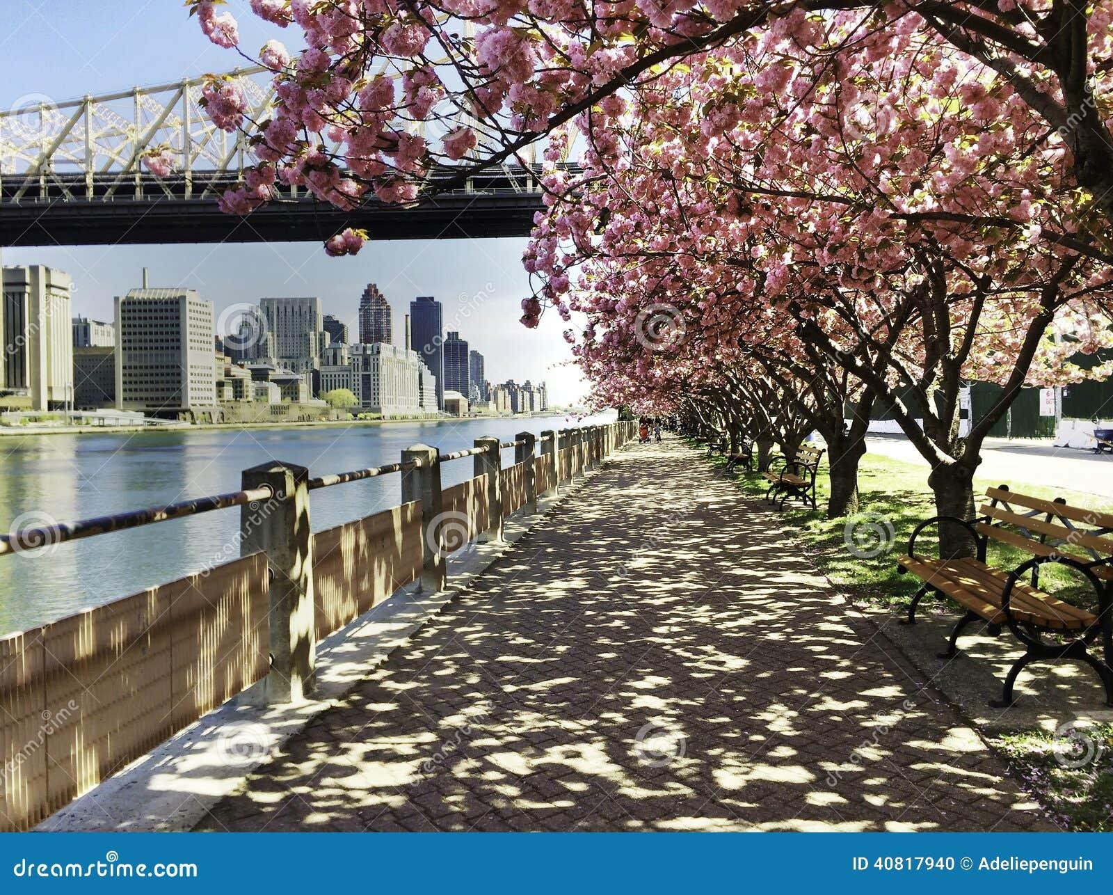Miasto widok z Czereśniowymi okwitnięciami, Nowy Jork