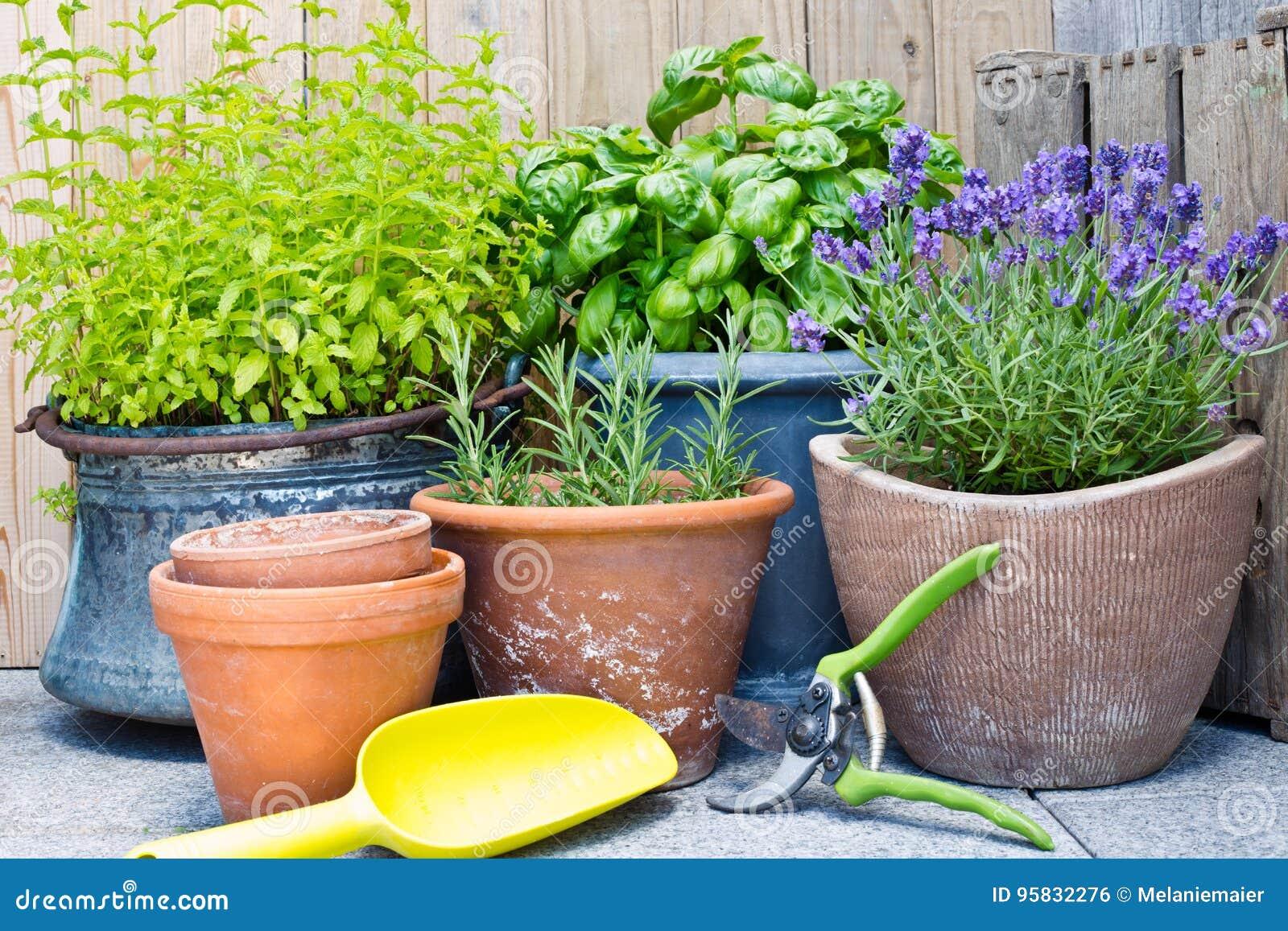Miastowy ogrodnictwo, świezi ziele w garnkach