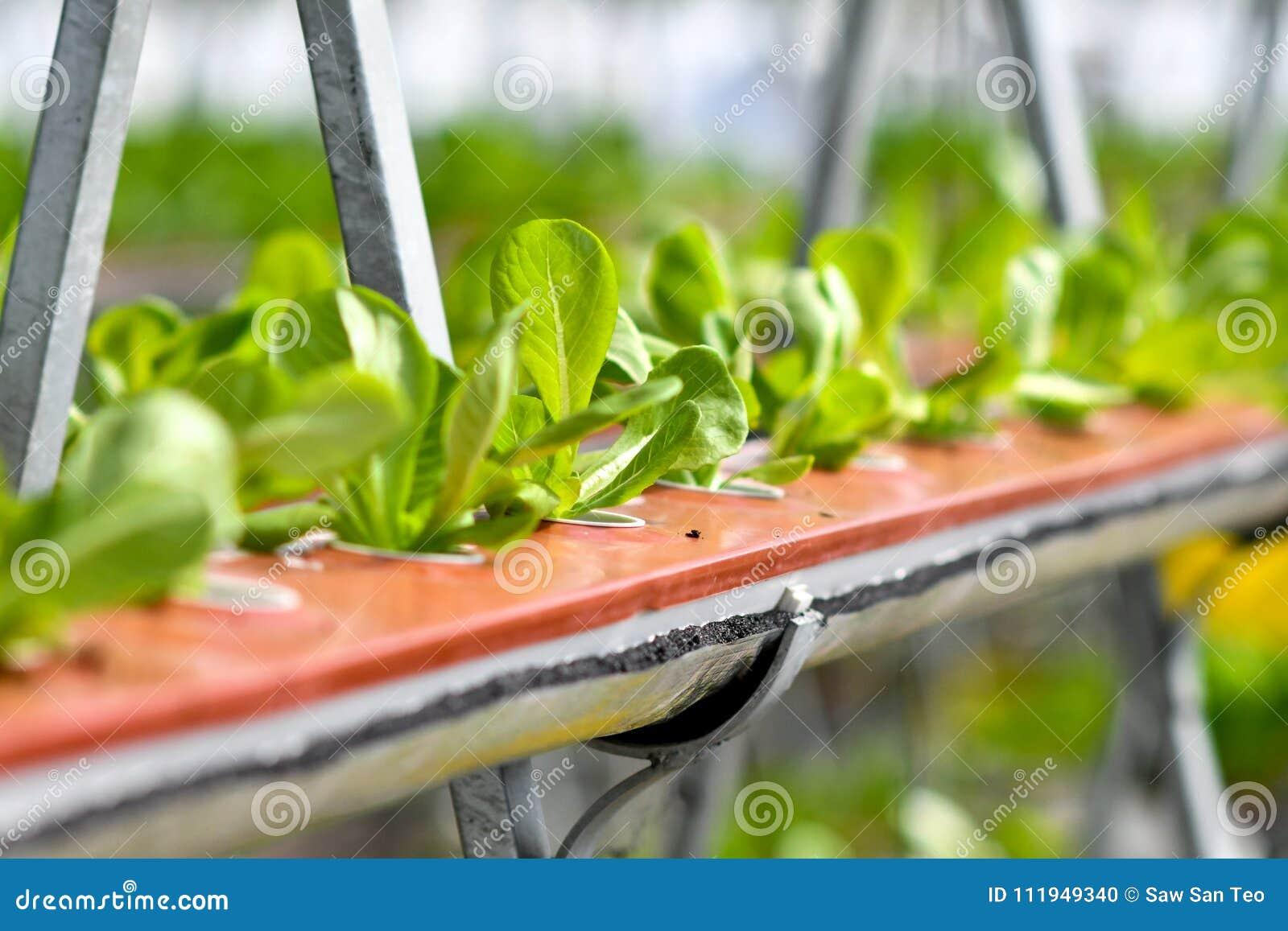 Miastowy rolnictwo, miastowy uprawiać ziemię lub miastowy ogrodnictwo,