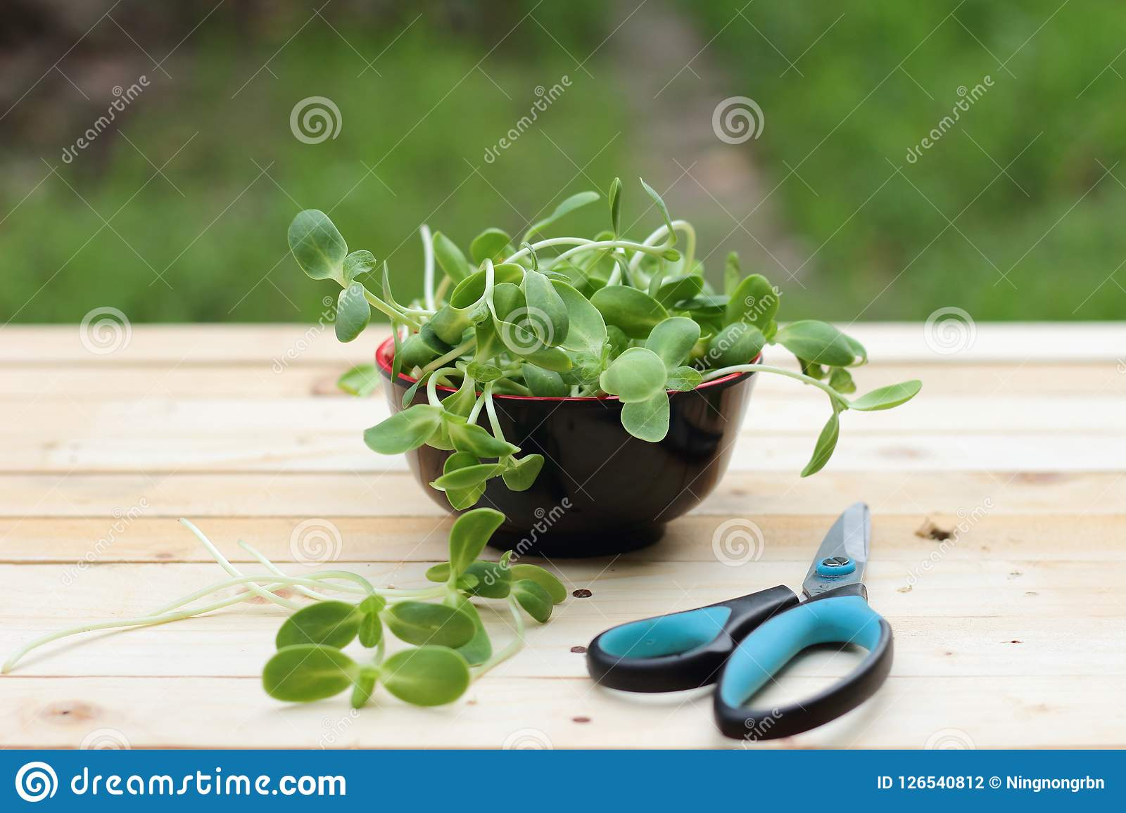 Micro green, vegetables