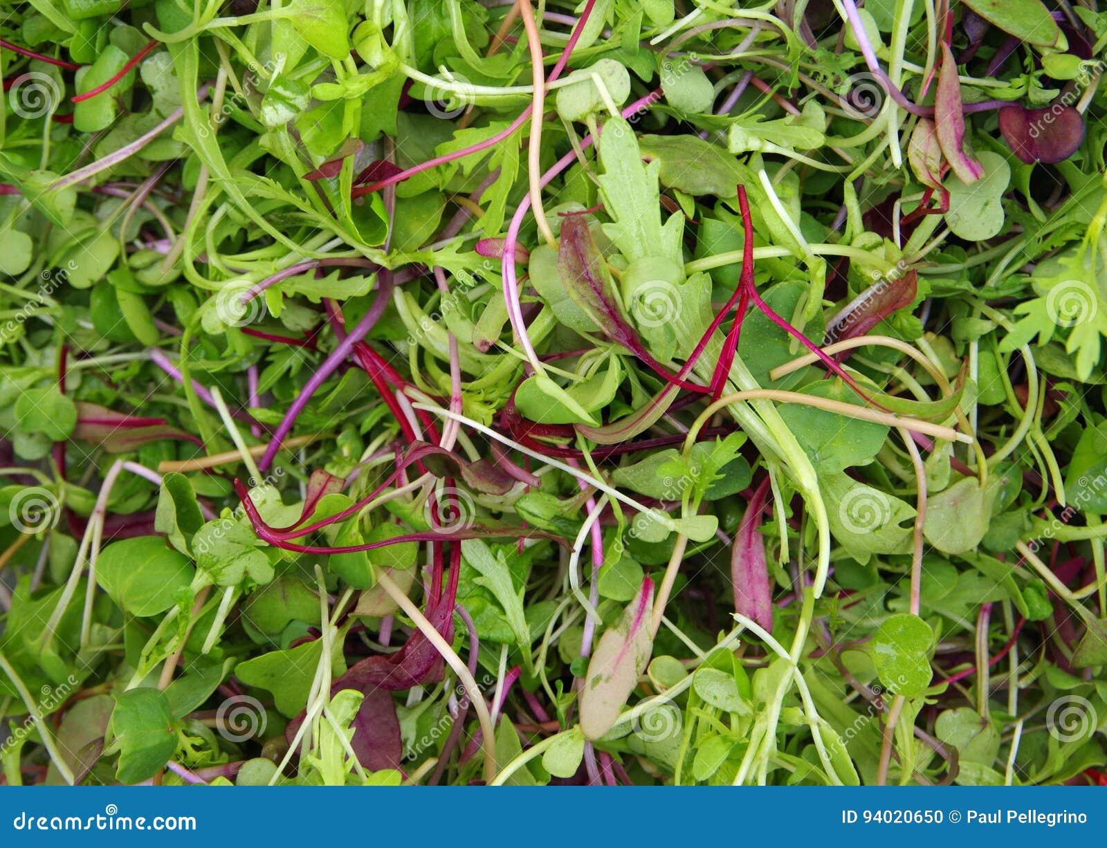 Micro salada do mesclun