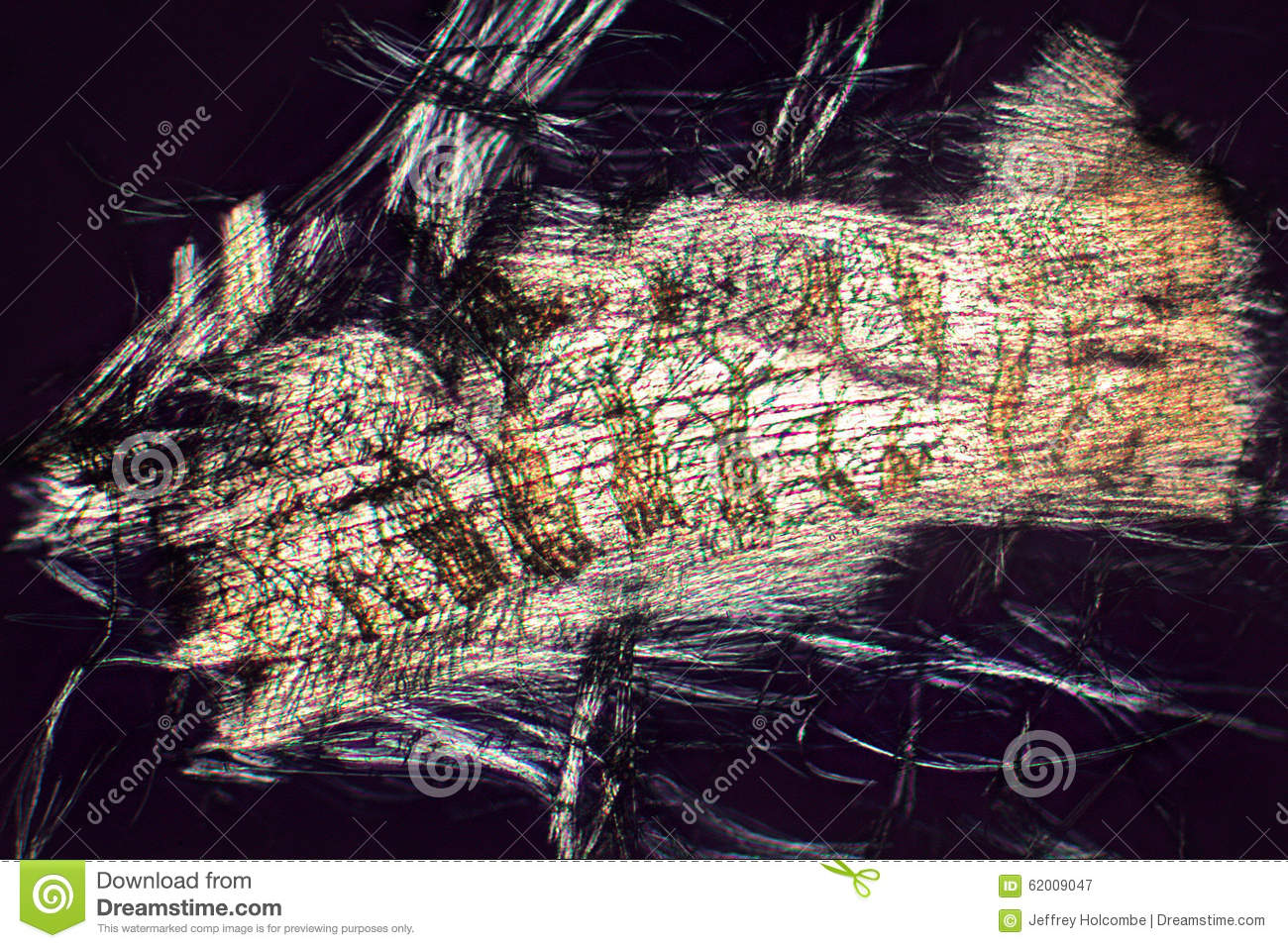 Micrograph abstract of flight muscle cells from a bottle fly.