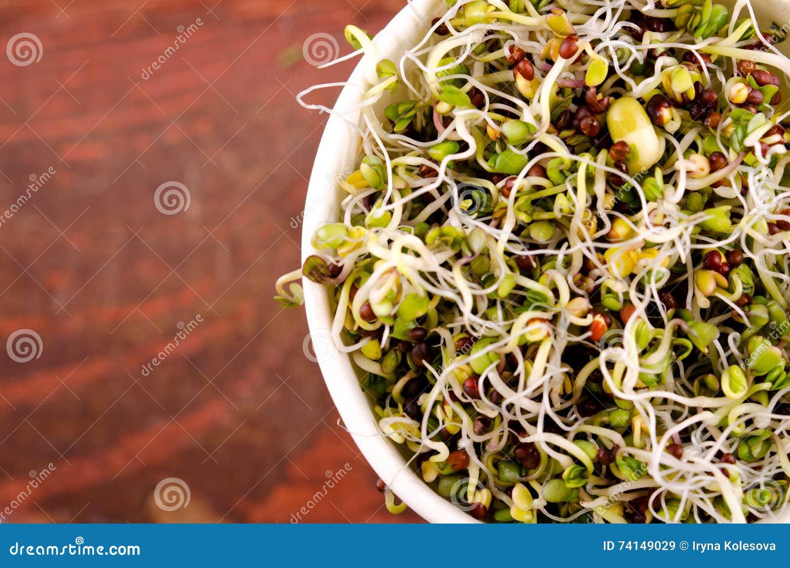 Microgreens sortiment i pappers- kopp Sund grön sallad med nya rå groddar