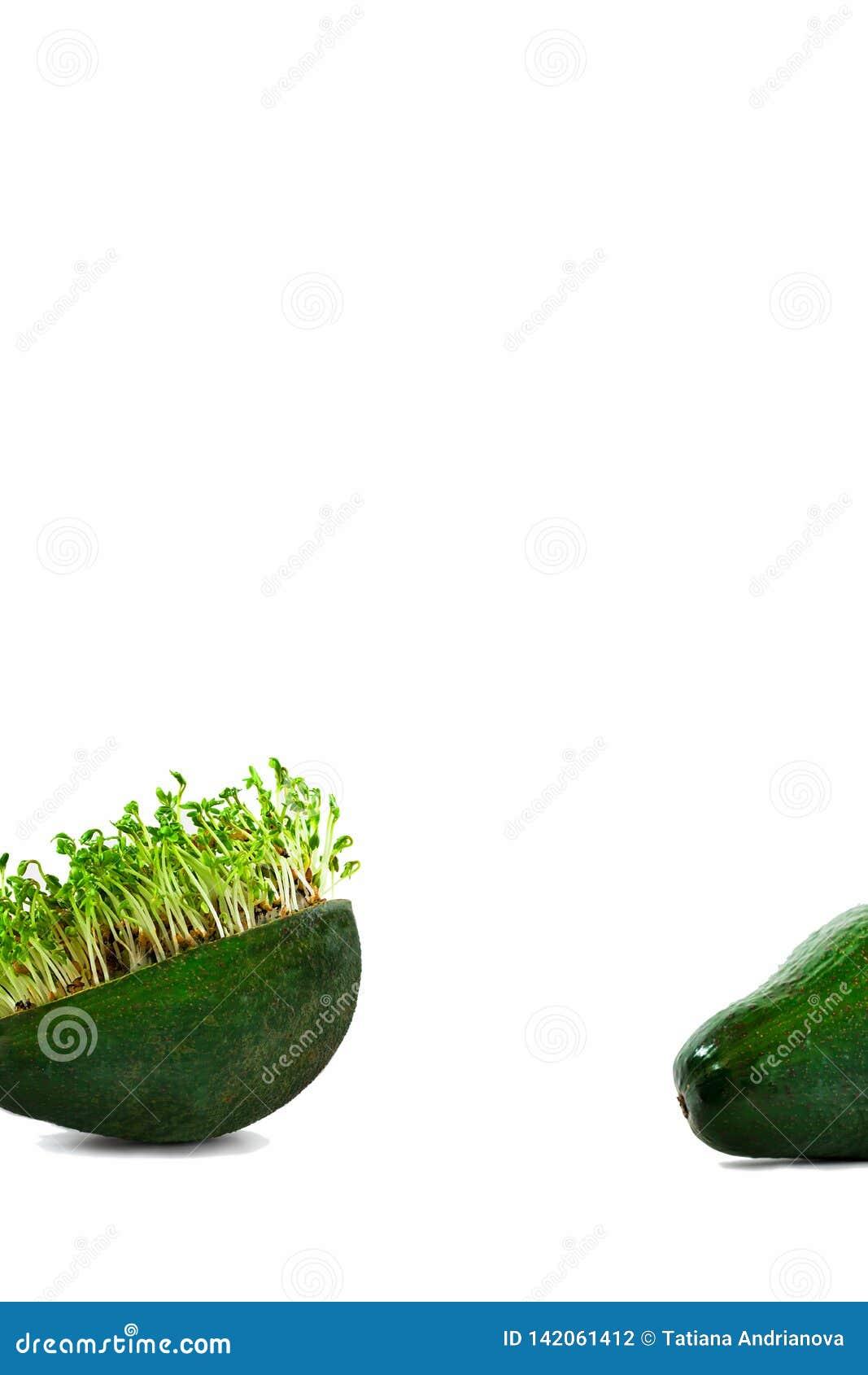 Microgreens verdi freschi del crescione acquatico nella pelle dell avocado in parte la parte inferiore di fondo vuoto bianco vert