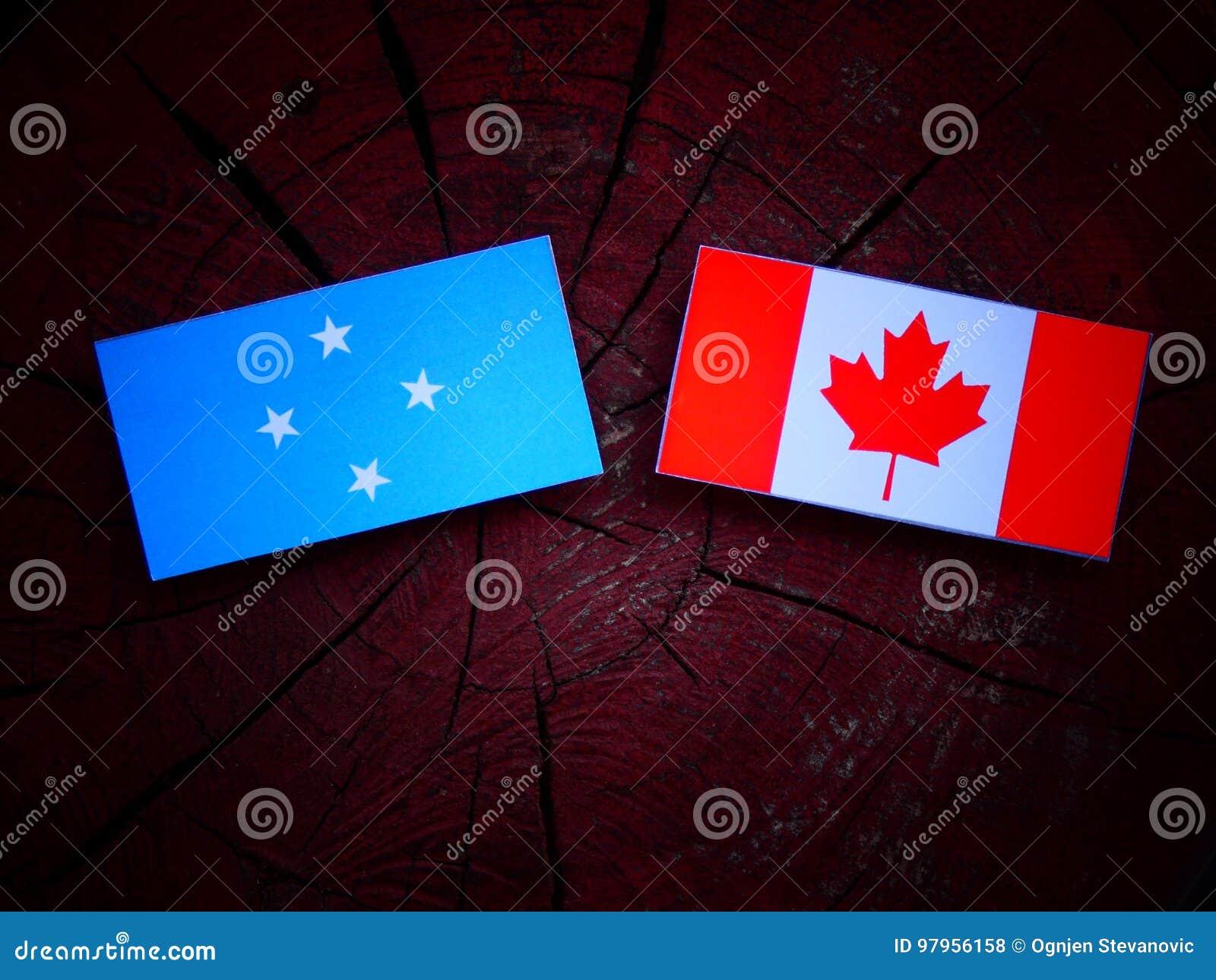 Micronesian flaga z kanadyjczyk flaga na drzewnym fiszorku odizolowywającym