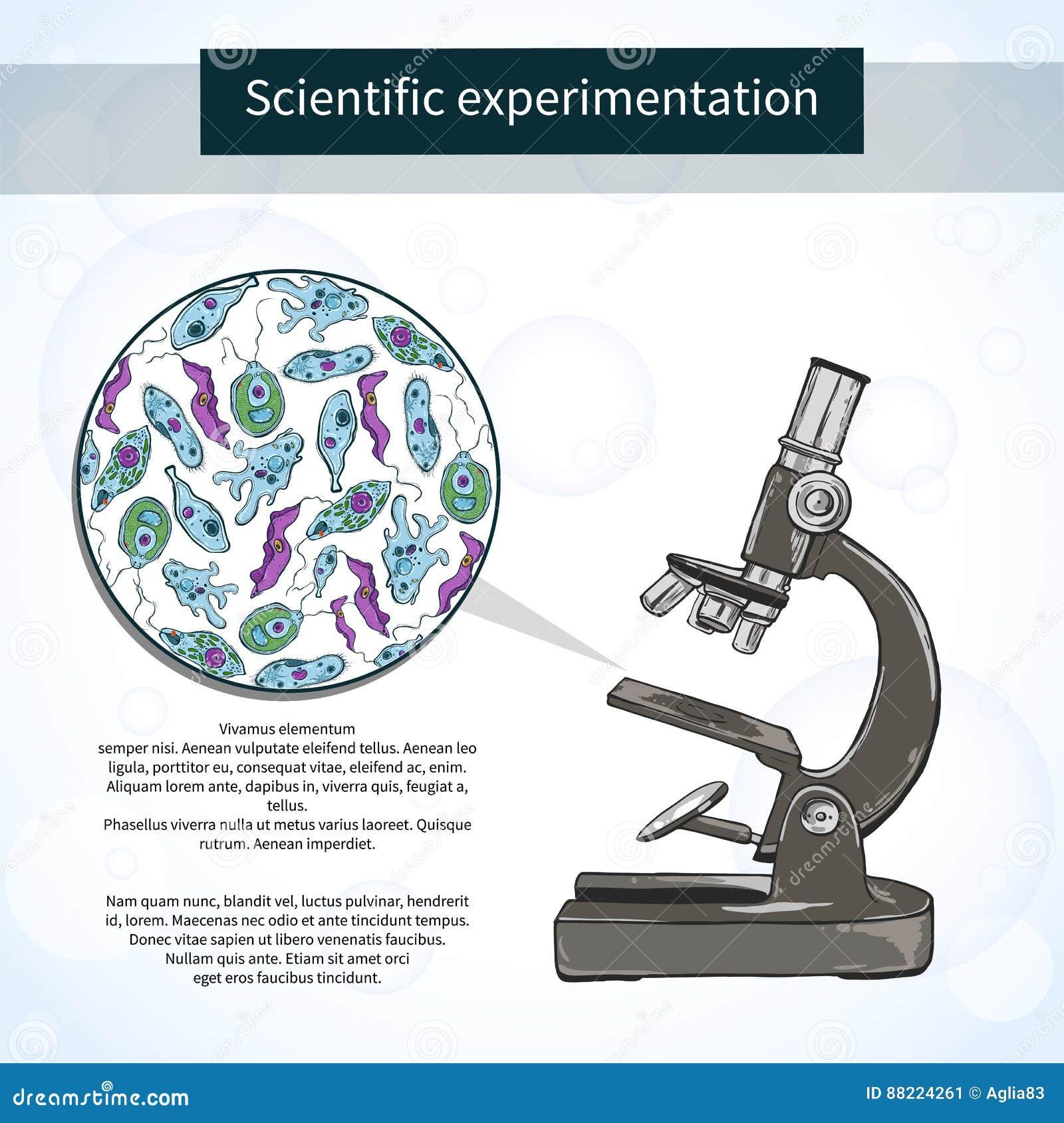 Microorganismos Debajo Del Microscopio Laboratorio Científico ...