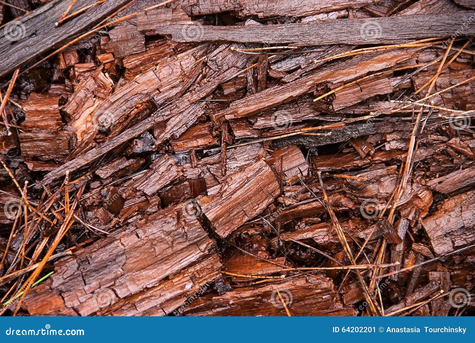 Microprocesadores de madera del bosque