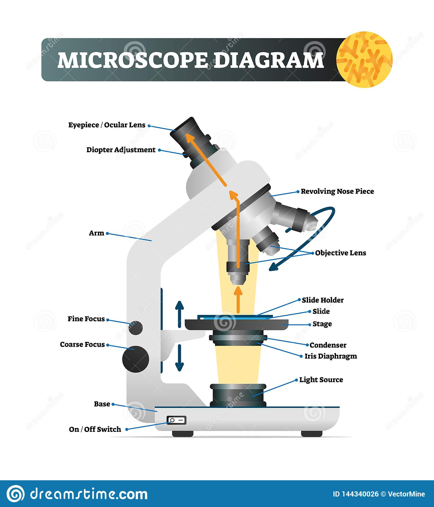 Microscope Diagram Vector Illustration Labeled Zoom Instrument